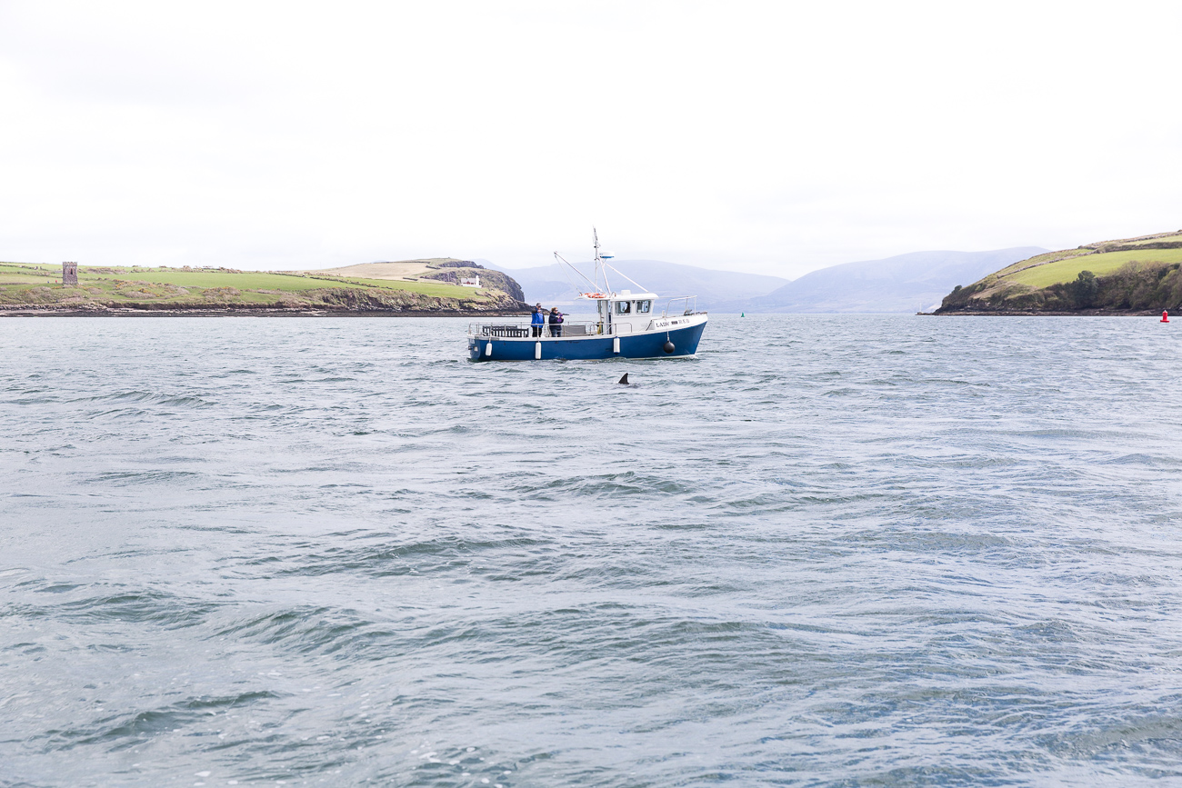 Boat Tour in Dingle to visit Fungie the dolphin