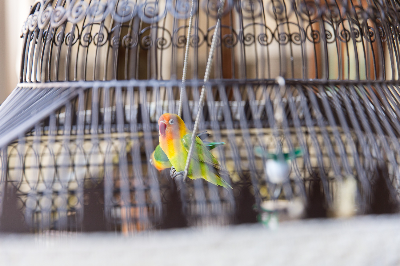 The birds of Hotel Royal Mansour