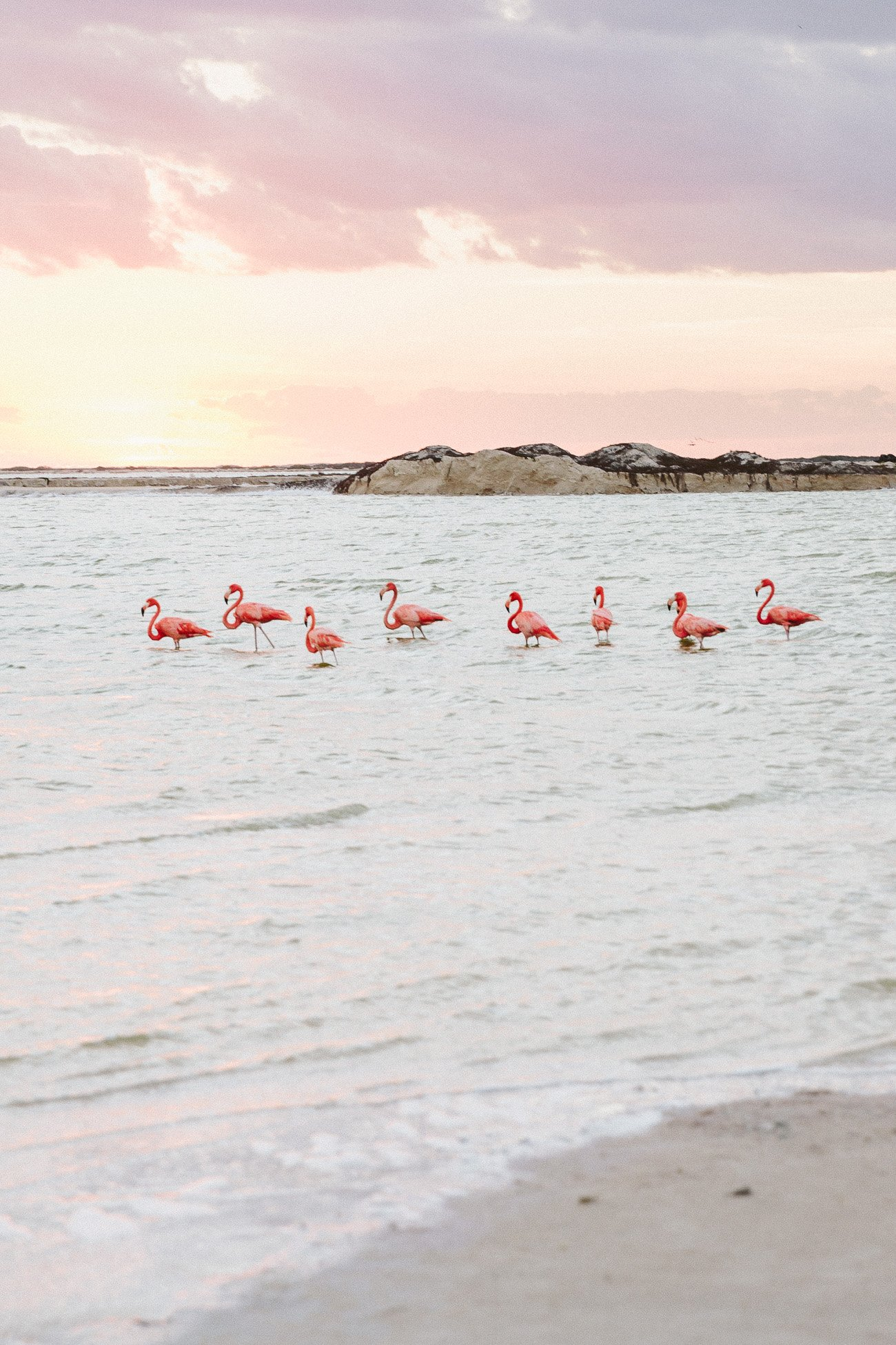 Flamingos at Las Coloradas, Yucatan