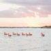 Flamingos at Las Coloradas, Yucatan