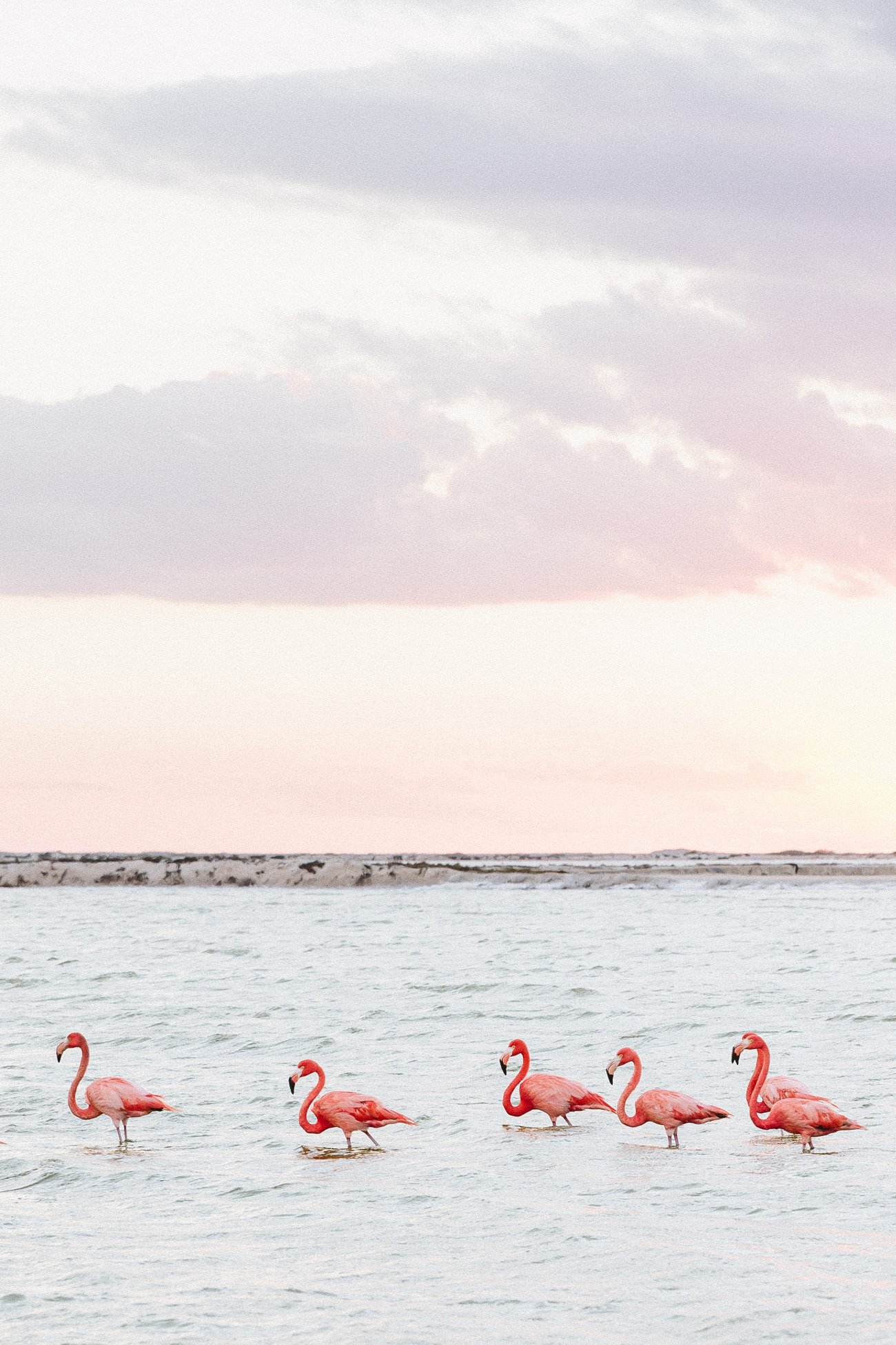 Flamingos at Las Coloradas, Yucatan, Mexico