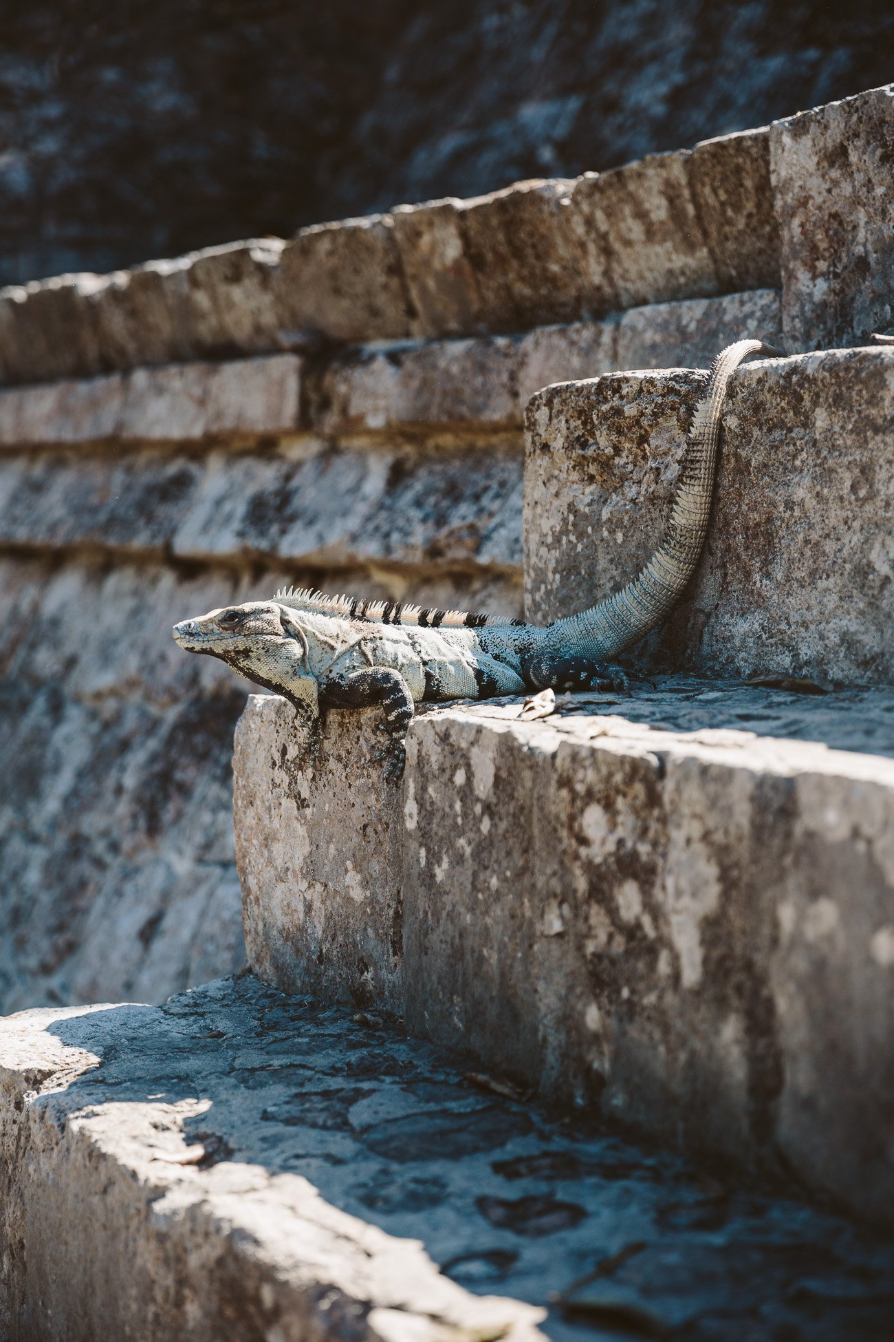 Uxmal animal encounter