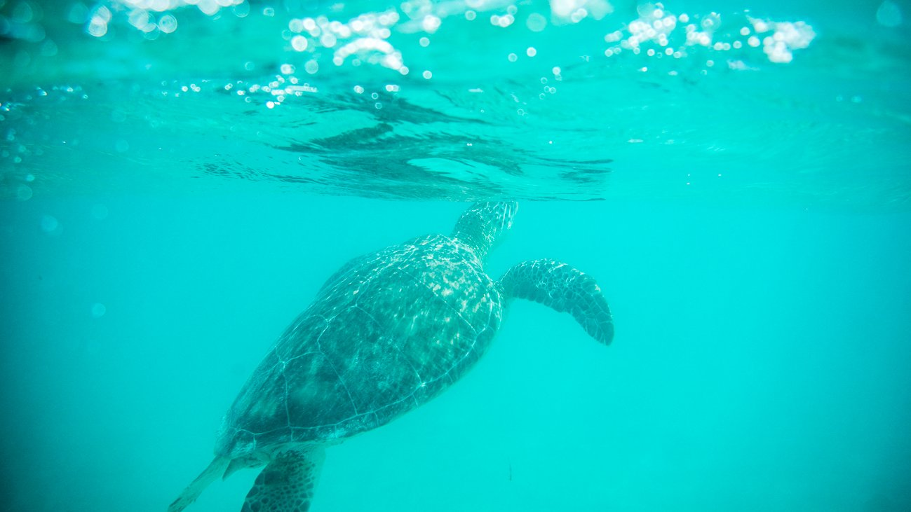 Swim with turtles in Tulum, Mexico