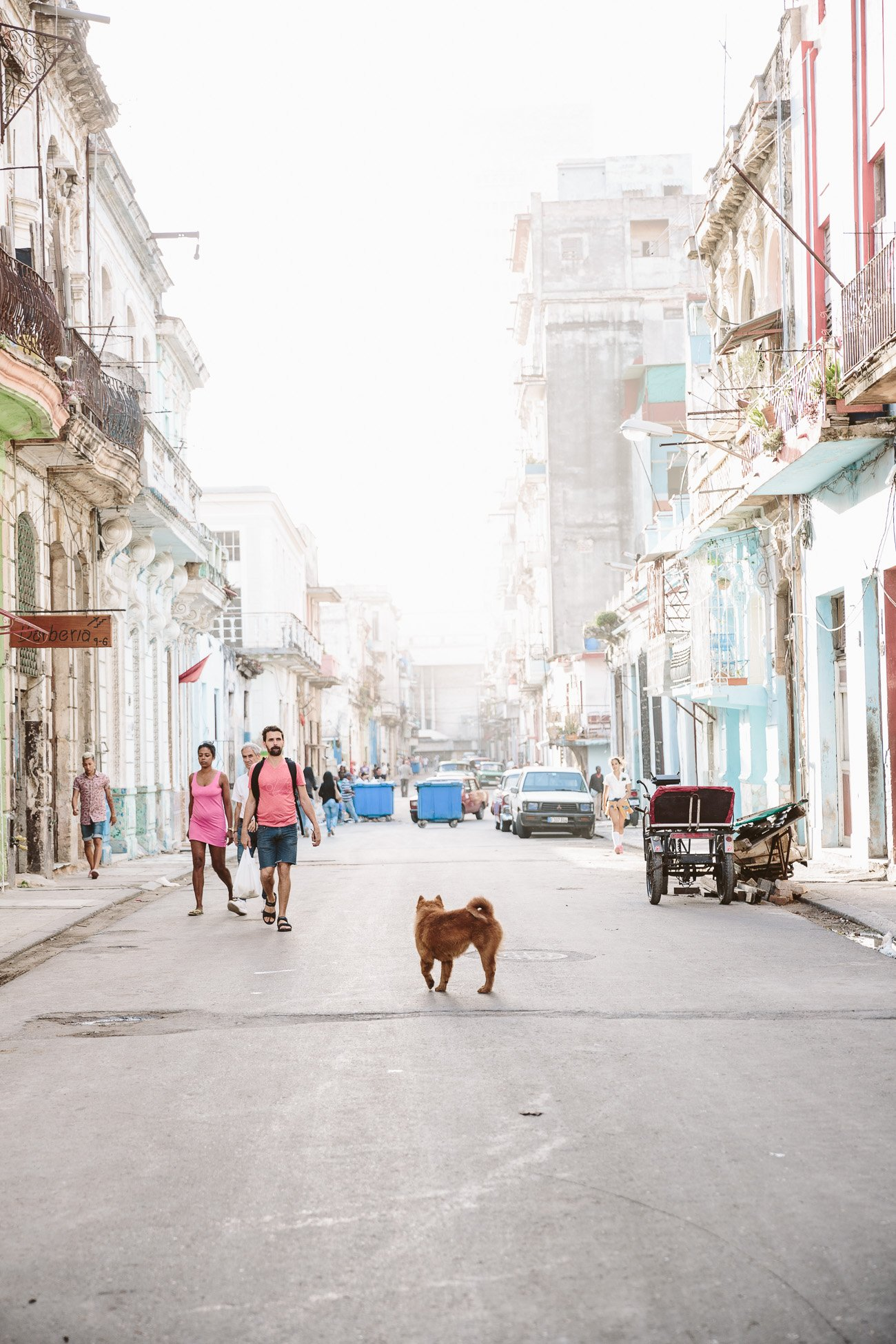 A dog stands in a street in Havana Cuba