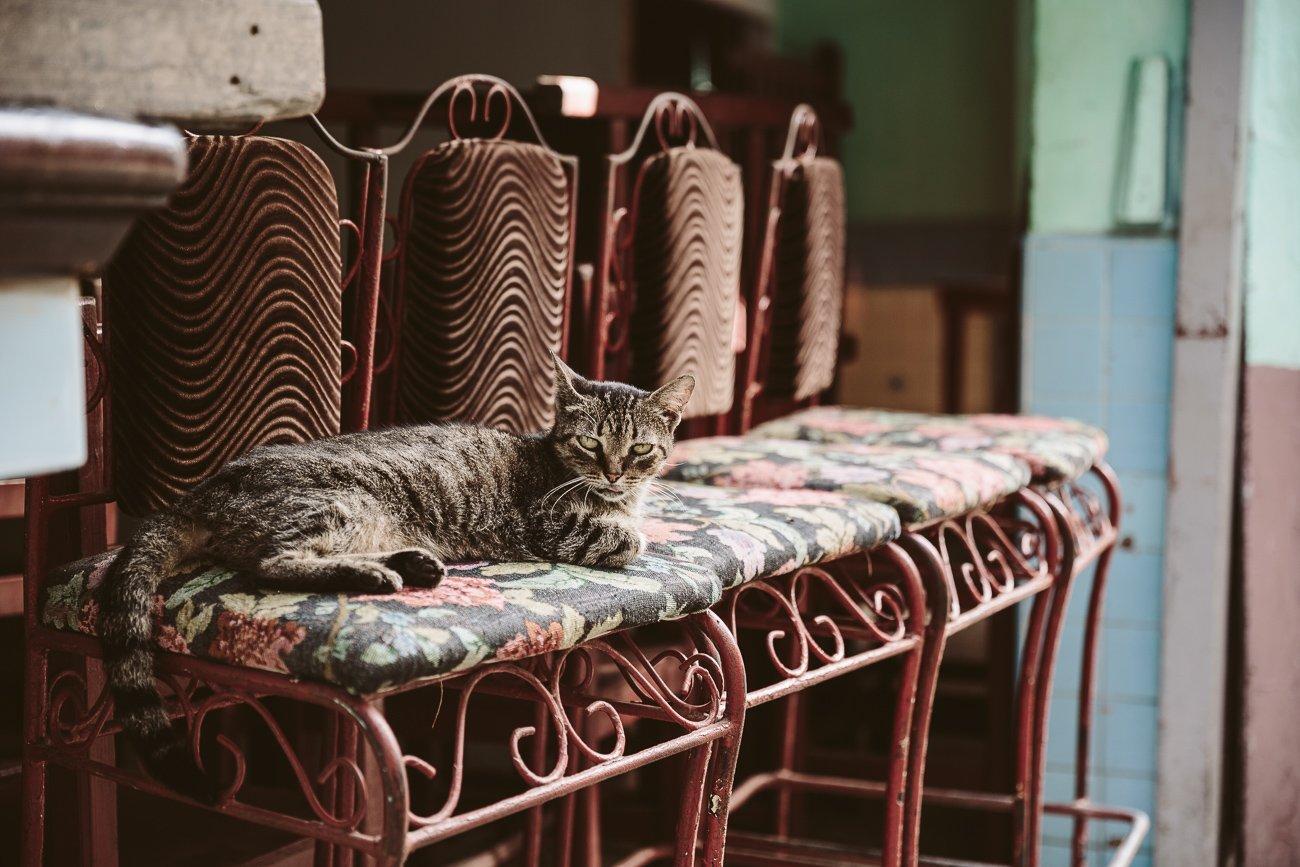 A Cat in a café in Havana Vieja Cuba