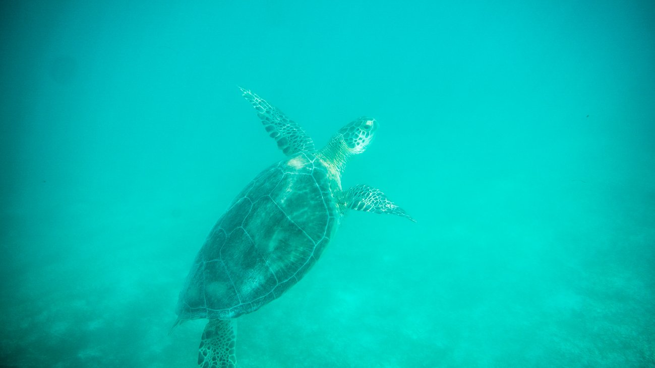 Snorkel with turtles in Akumal Mexico