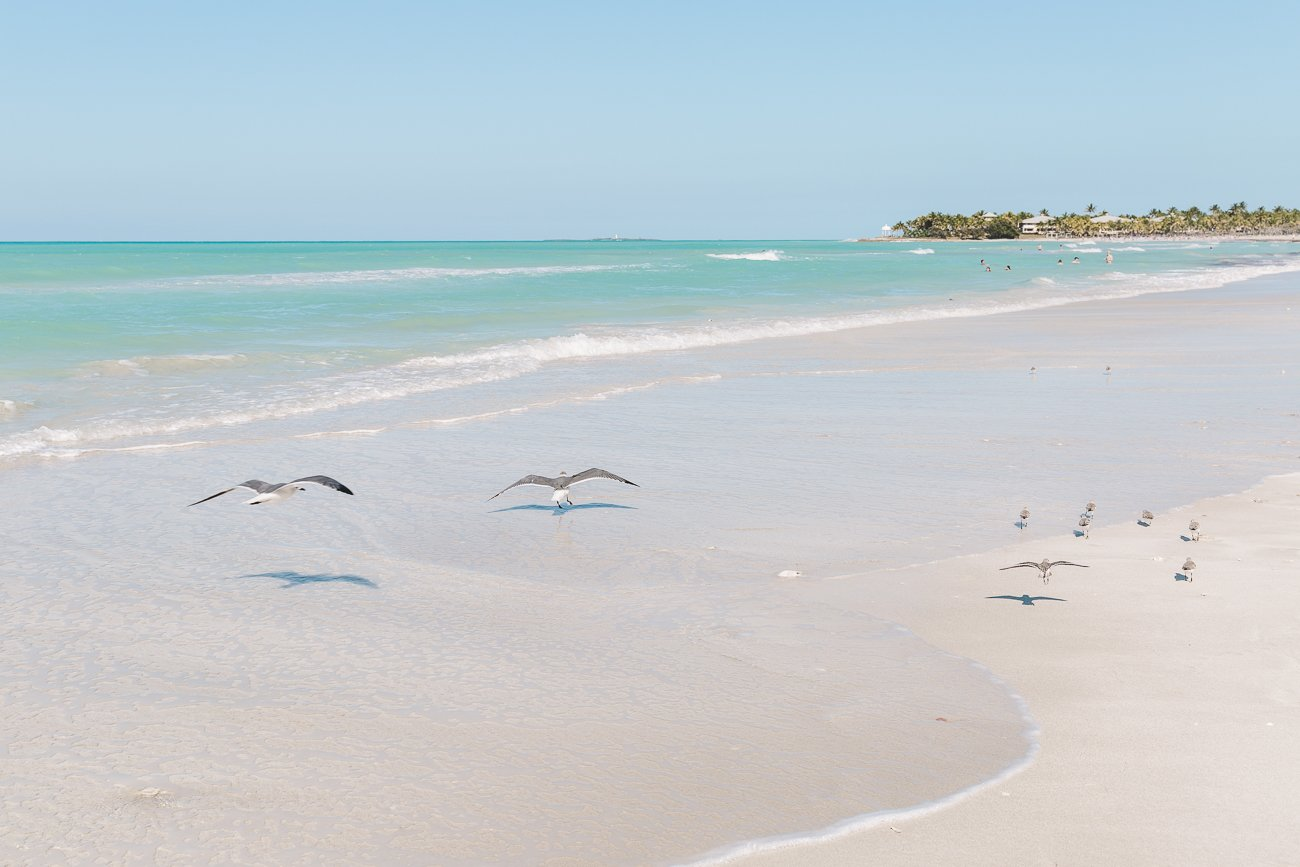 Seagulls at the beach of Varadero Cuba