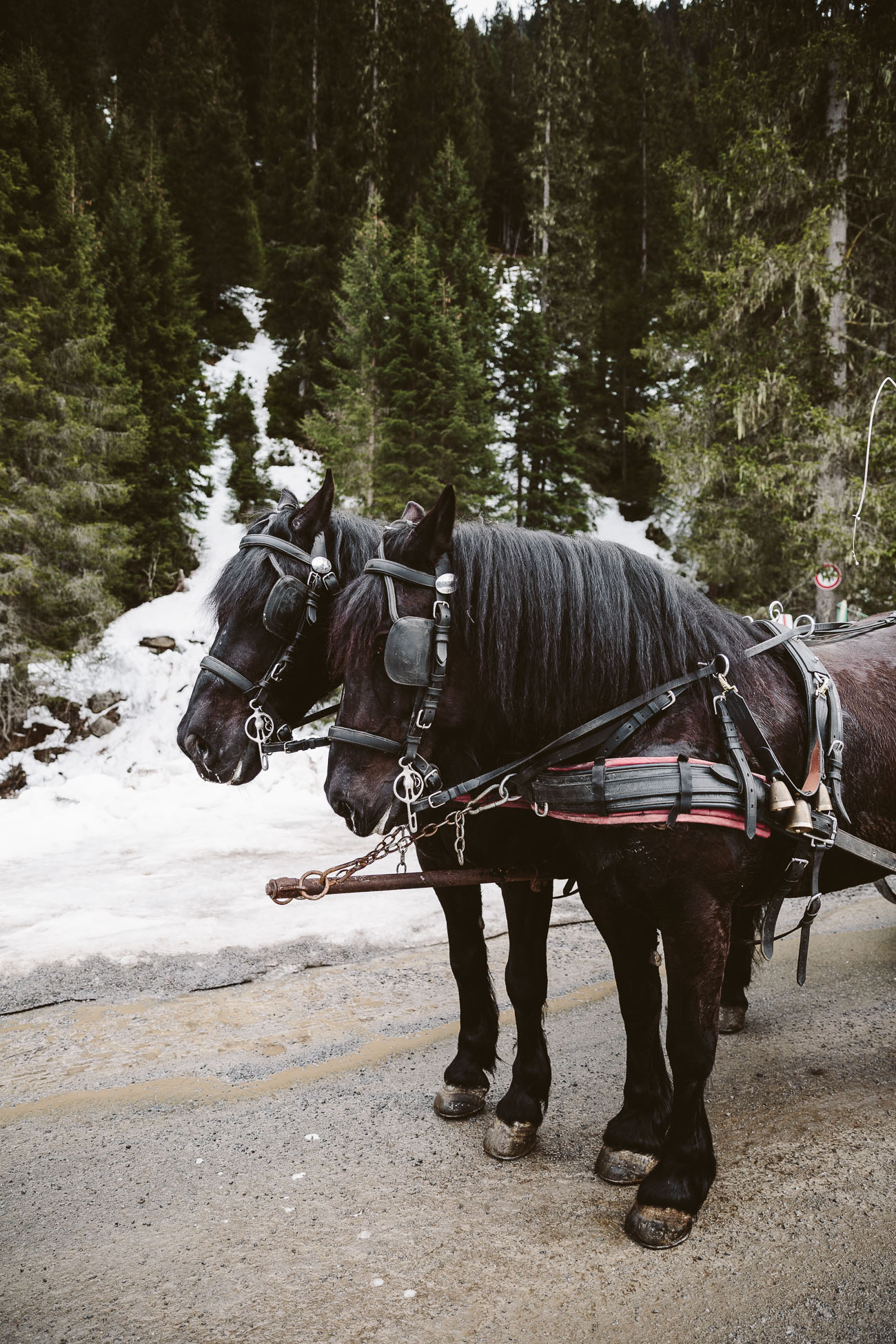 Horse carriage ride in St. Anton