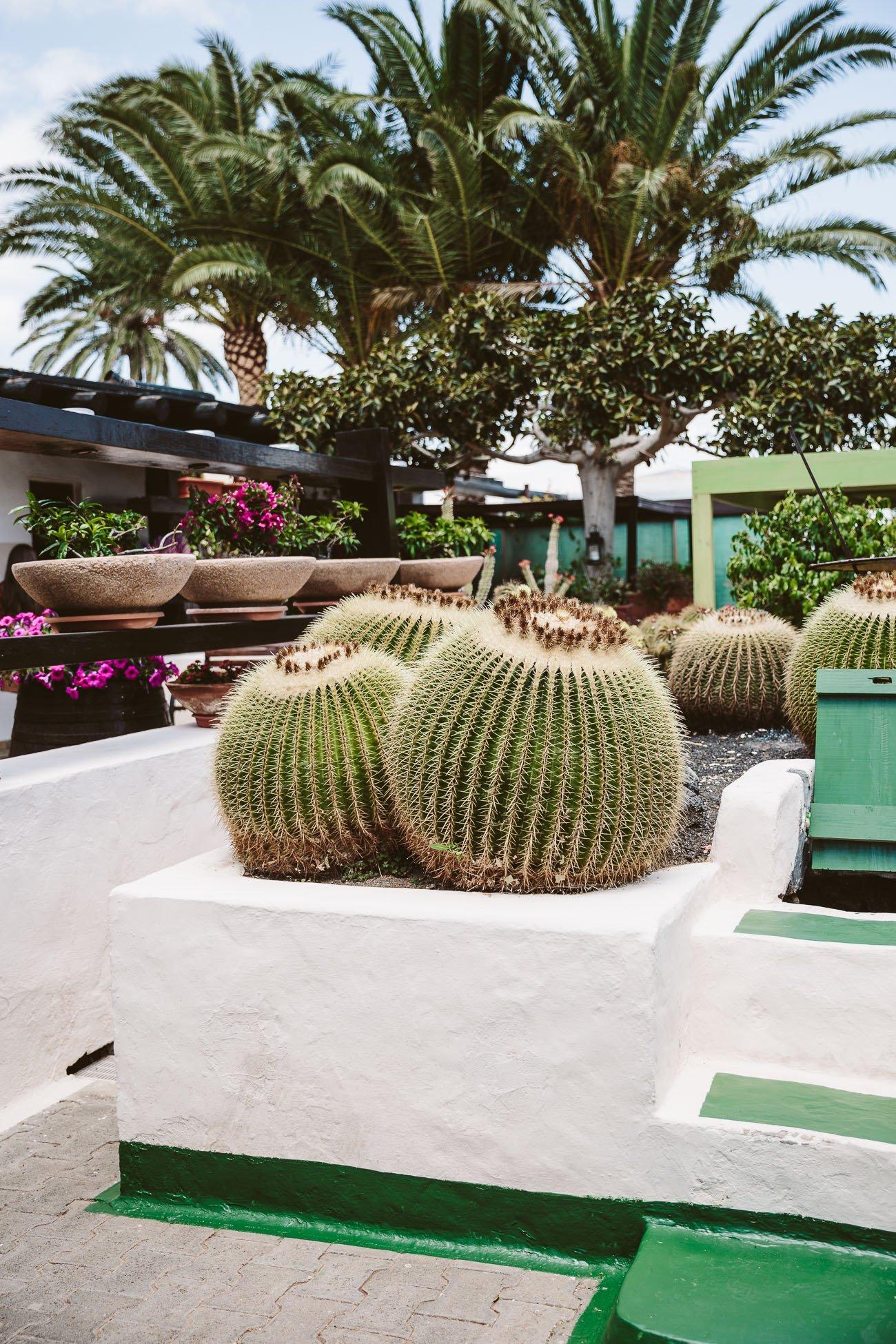 Bodega de Uga Lanzarote