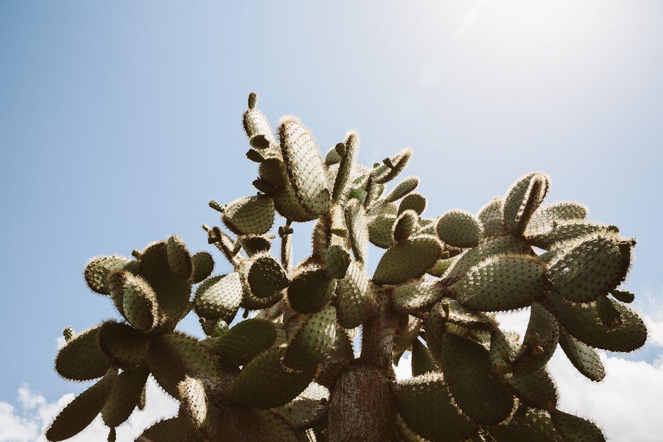 Jardín de Cactus by César Manrique in Lanzarote