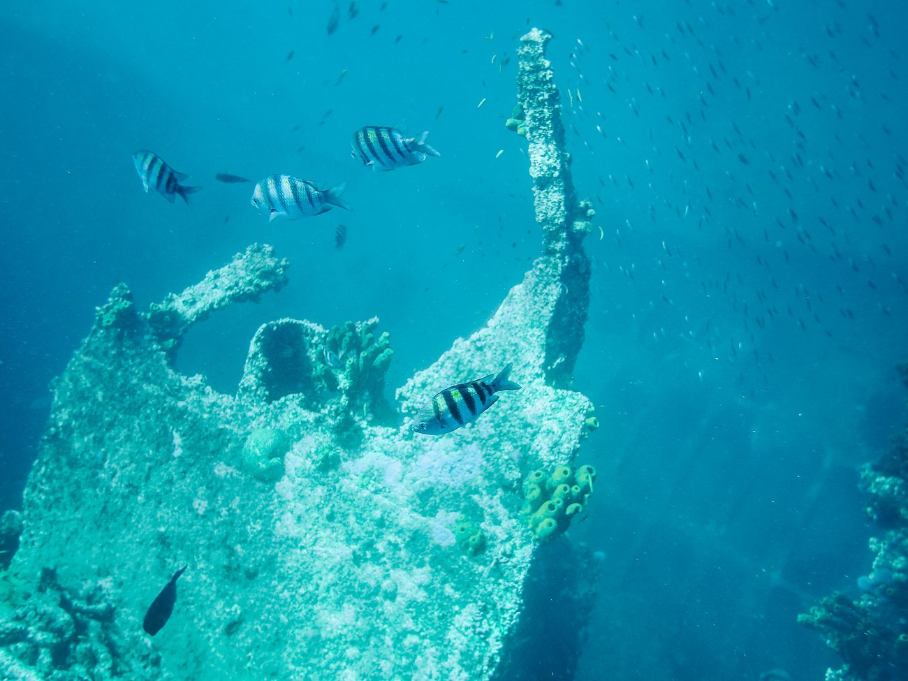 Snorkeling at Antilla Shipwreck in Aruba