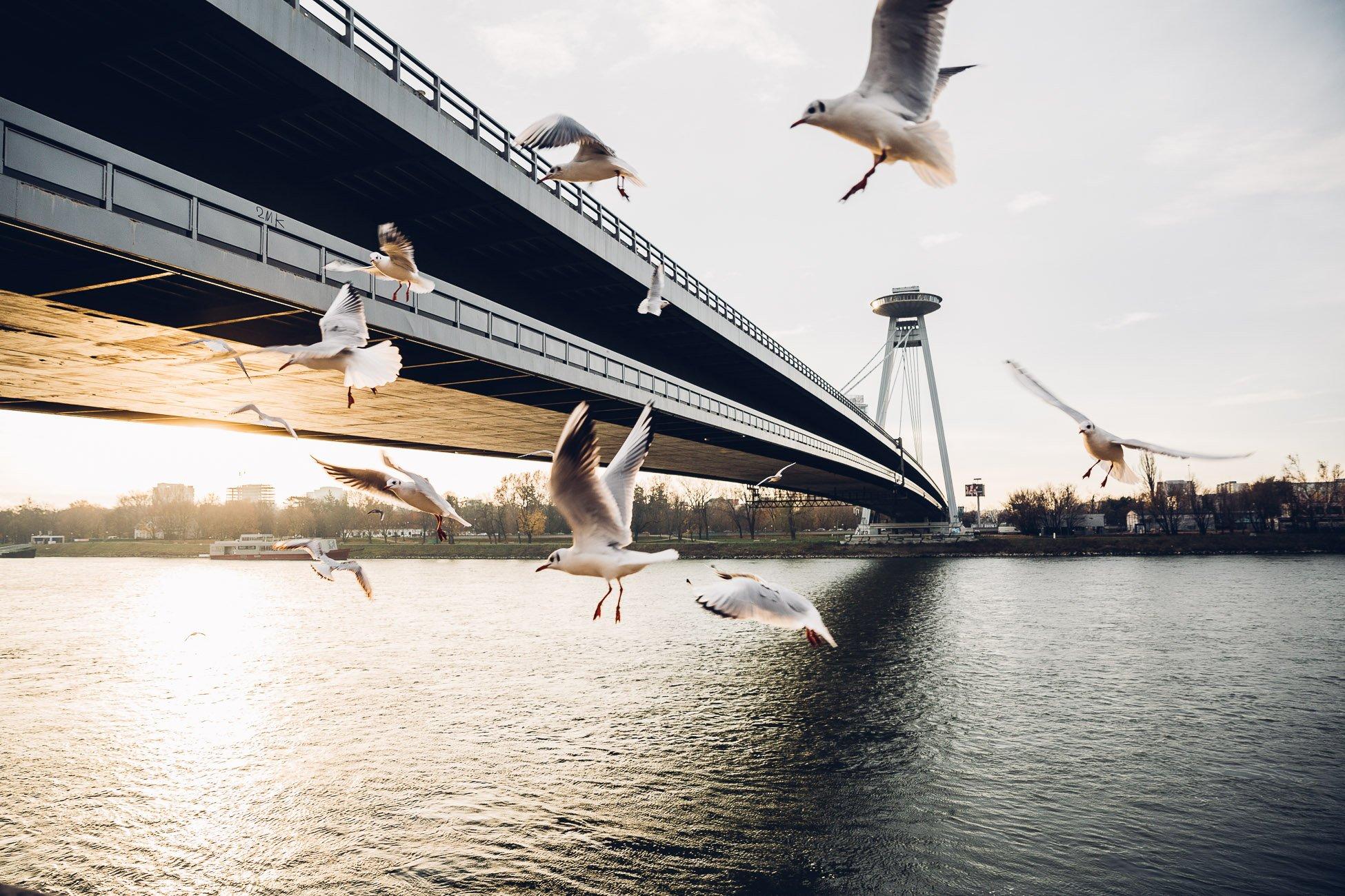 UFO and New Bridge in Bratislava