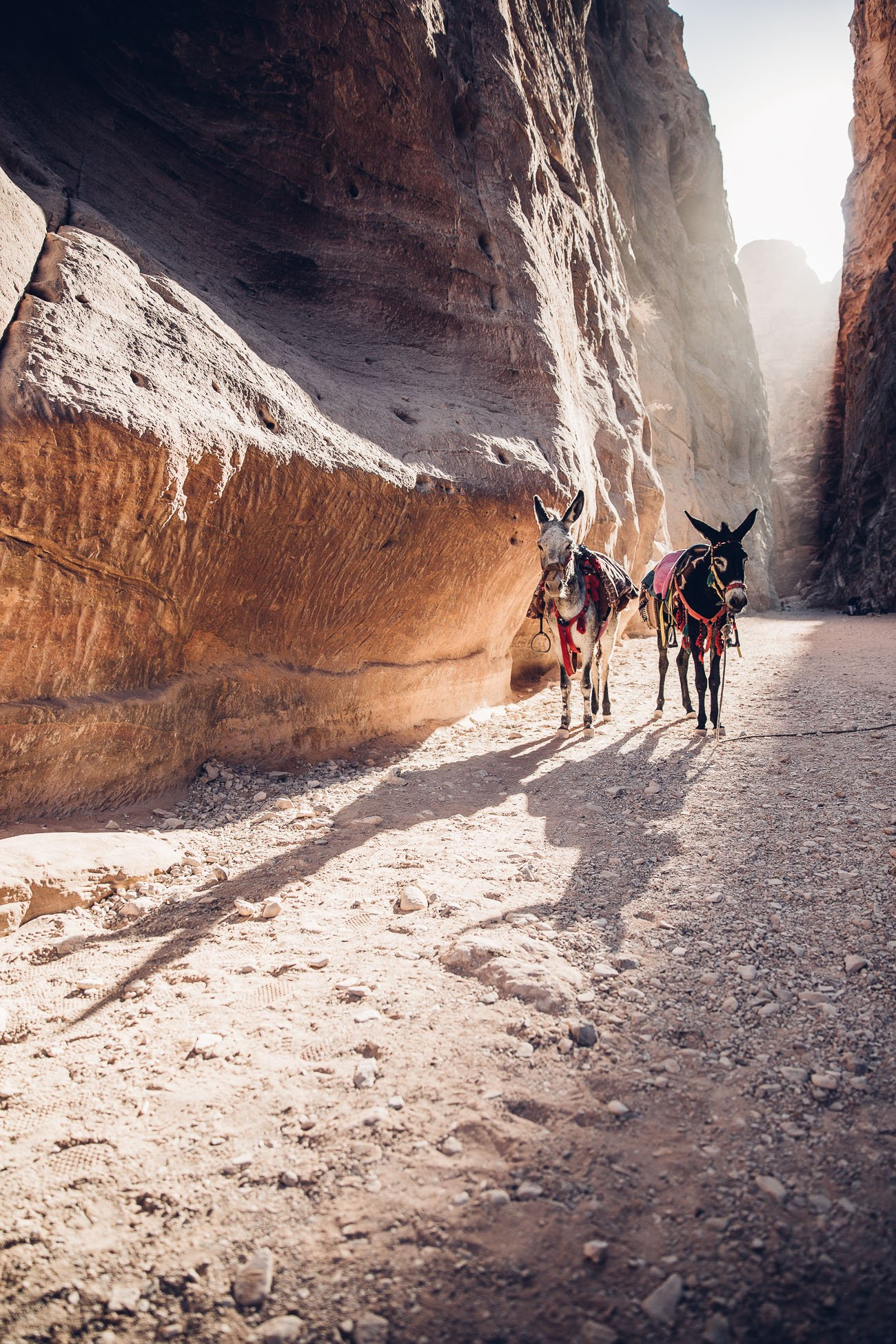 Donkeys at Petra in the morning light