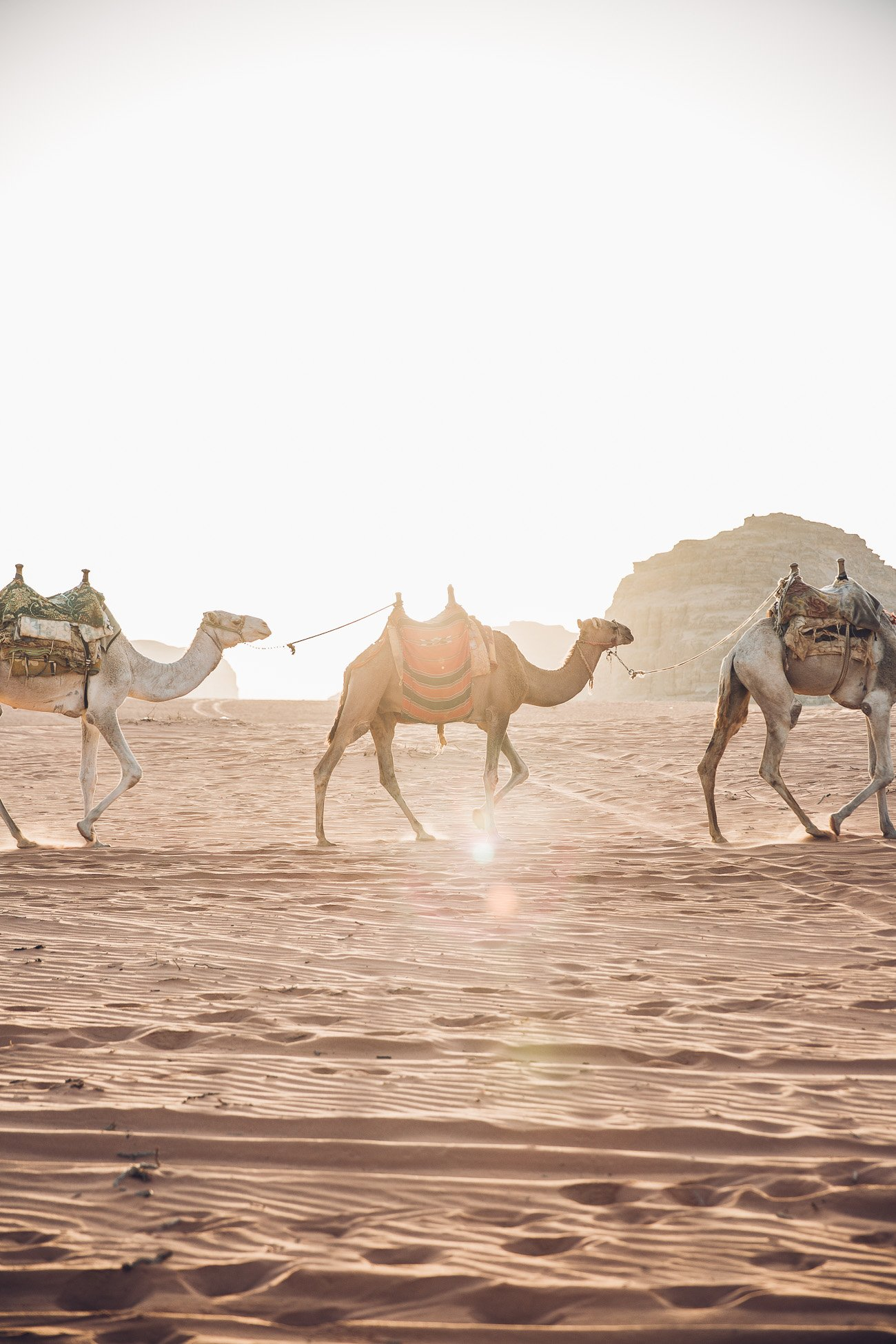 Camel ride in Wadi Rum at Sunrise