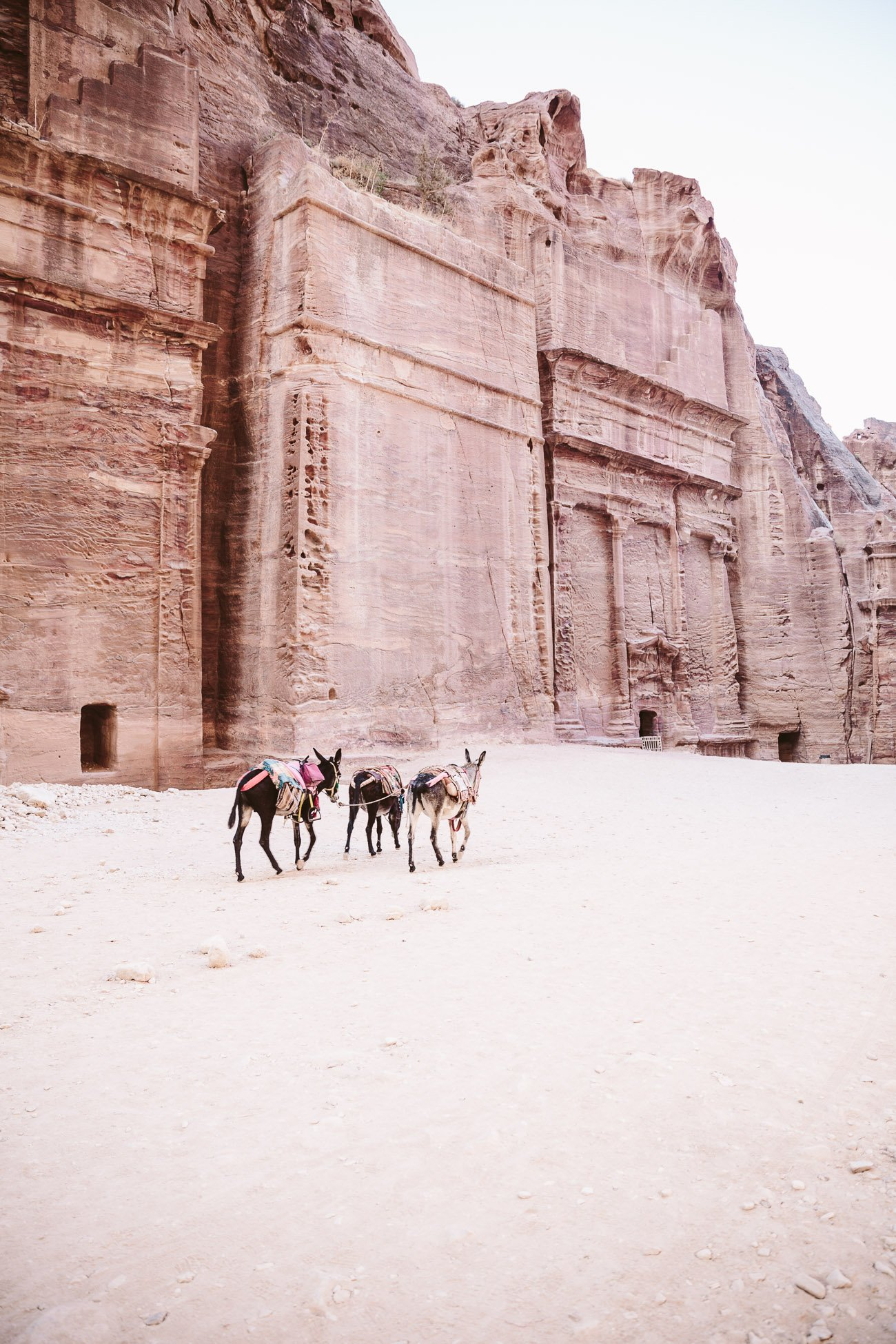 Donkeys in Petra Jordan