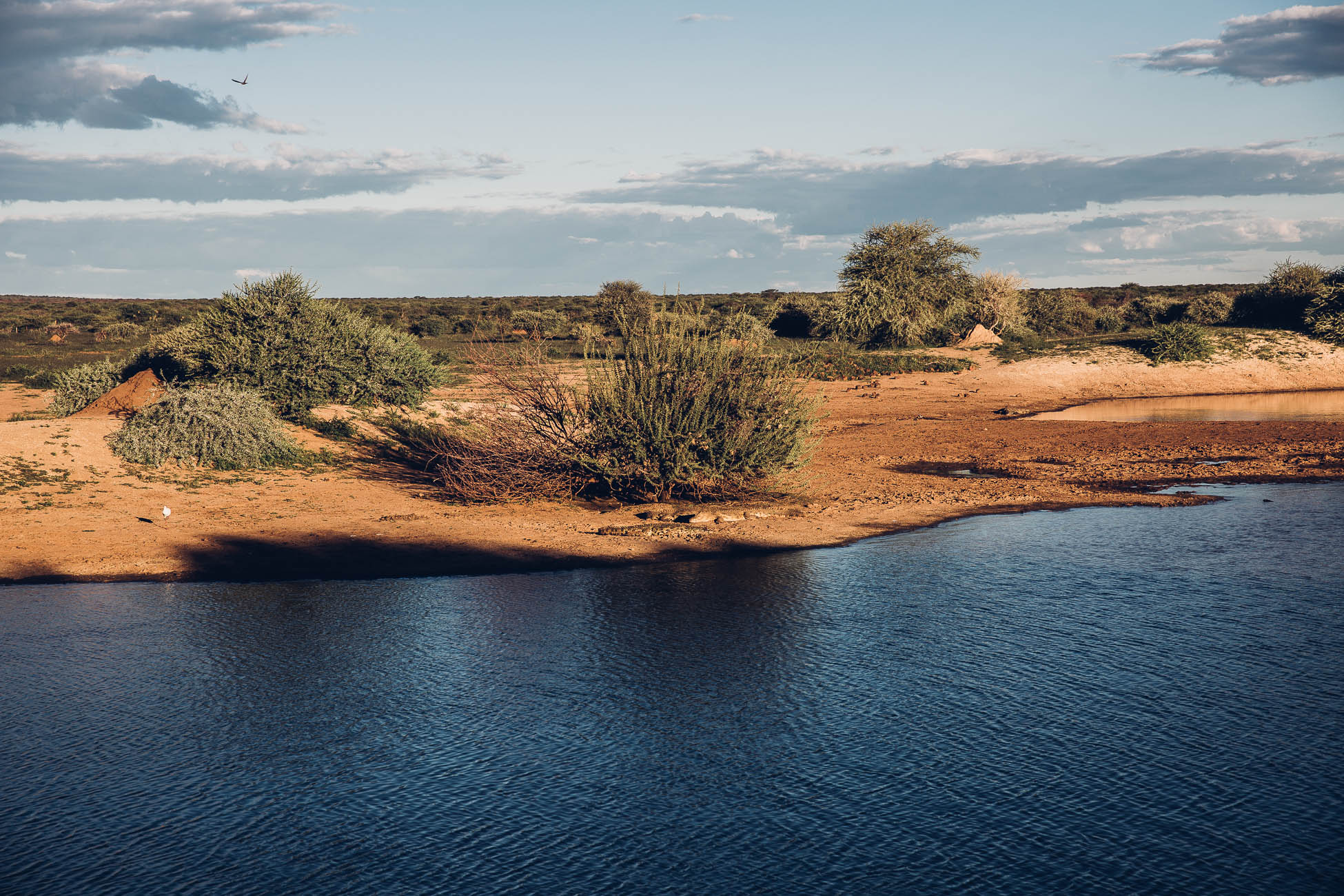 Water hole at Erindi Private Game Reserve