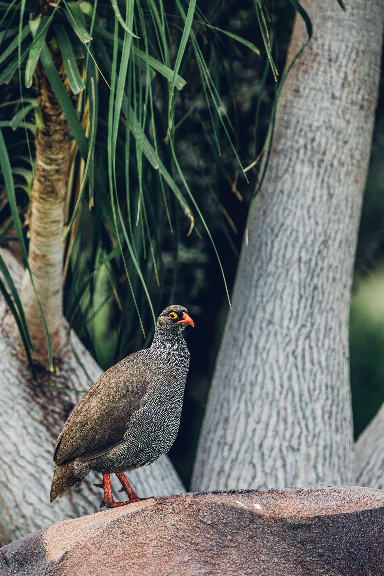 Bird at a Safari in Namibia