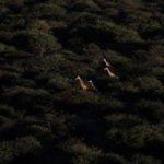 Giraffes at Erindi Private Game Reserve