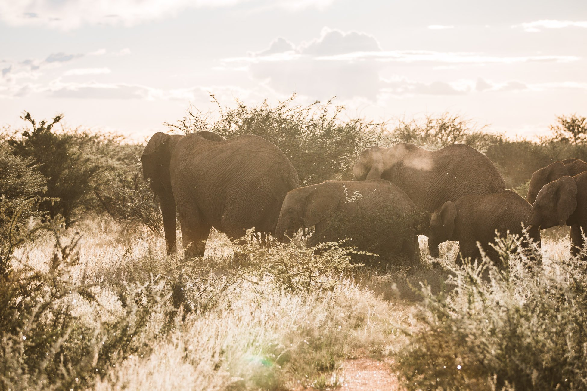 Elephant herd at Erindi Private Game Reserve