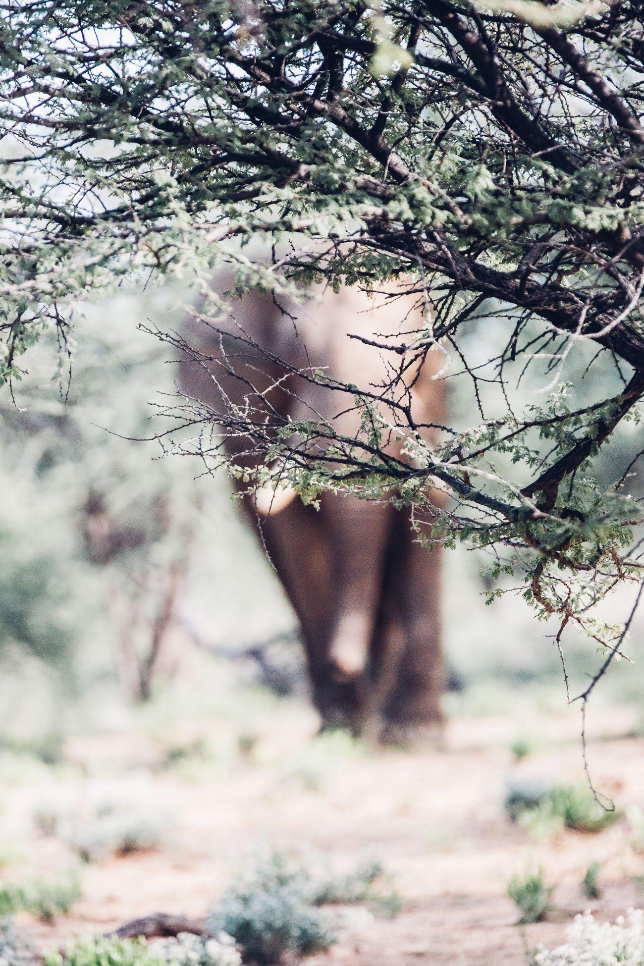 Elephant at a Safari in Namibia