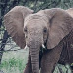 Elephant at Erindi Private Game Reserve