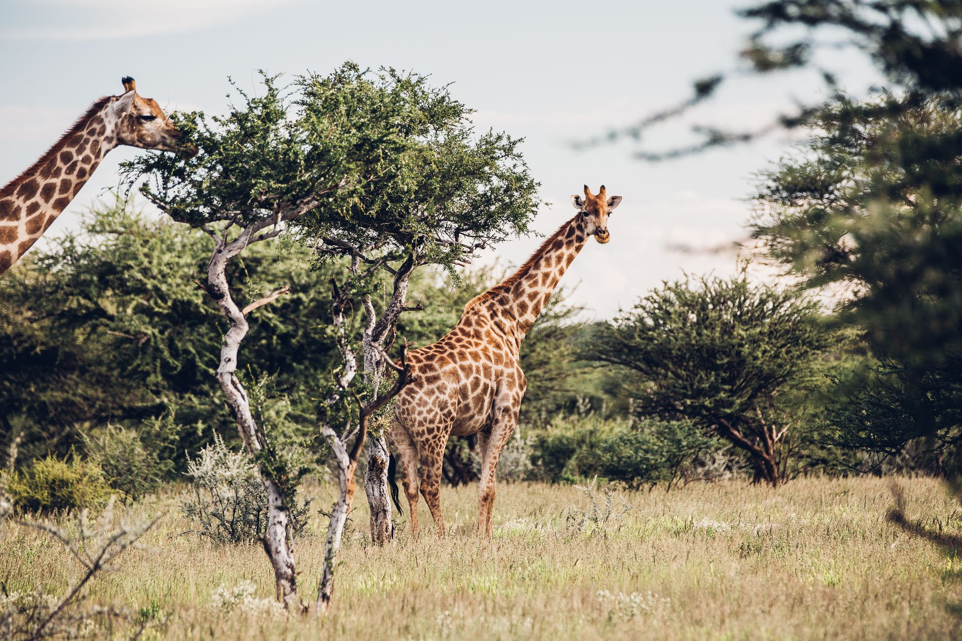 Namibia Safari Destination