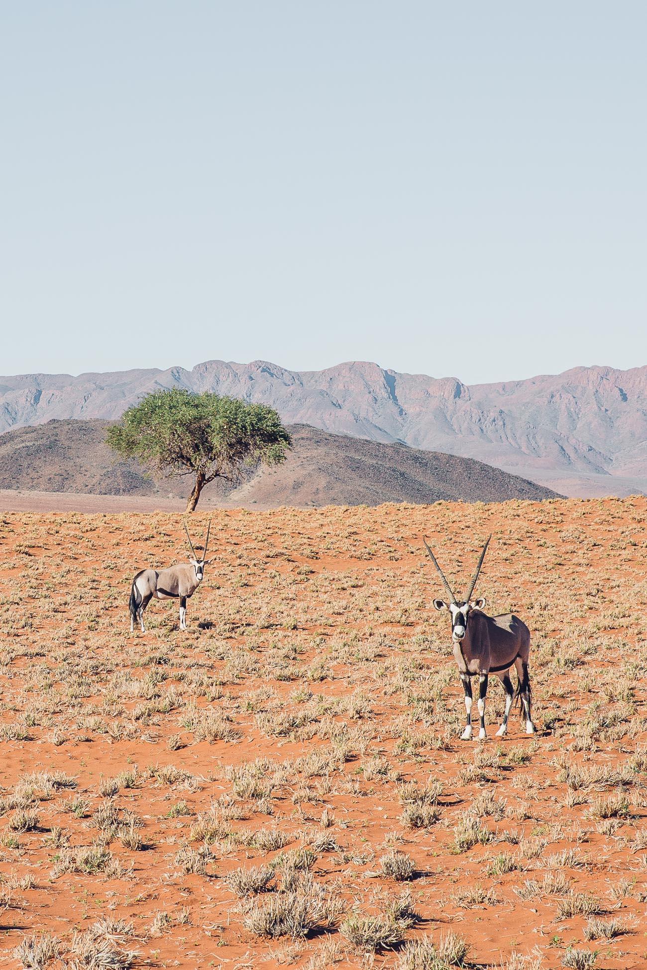 Oryx at NamibRand Wolwedans