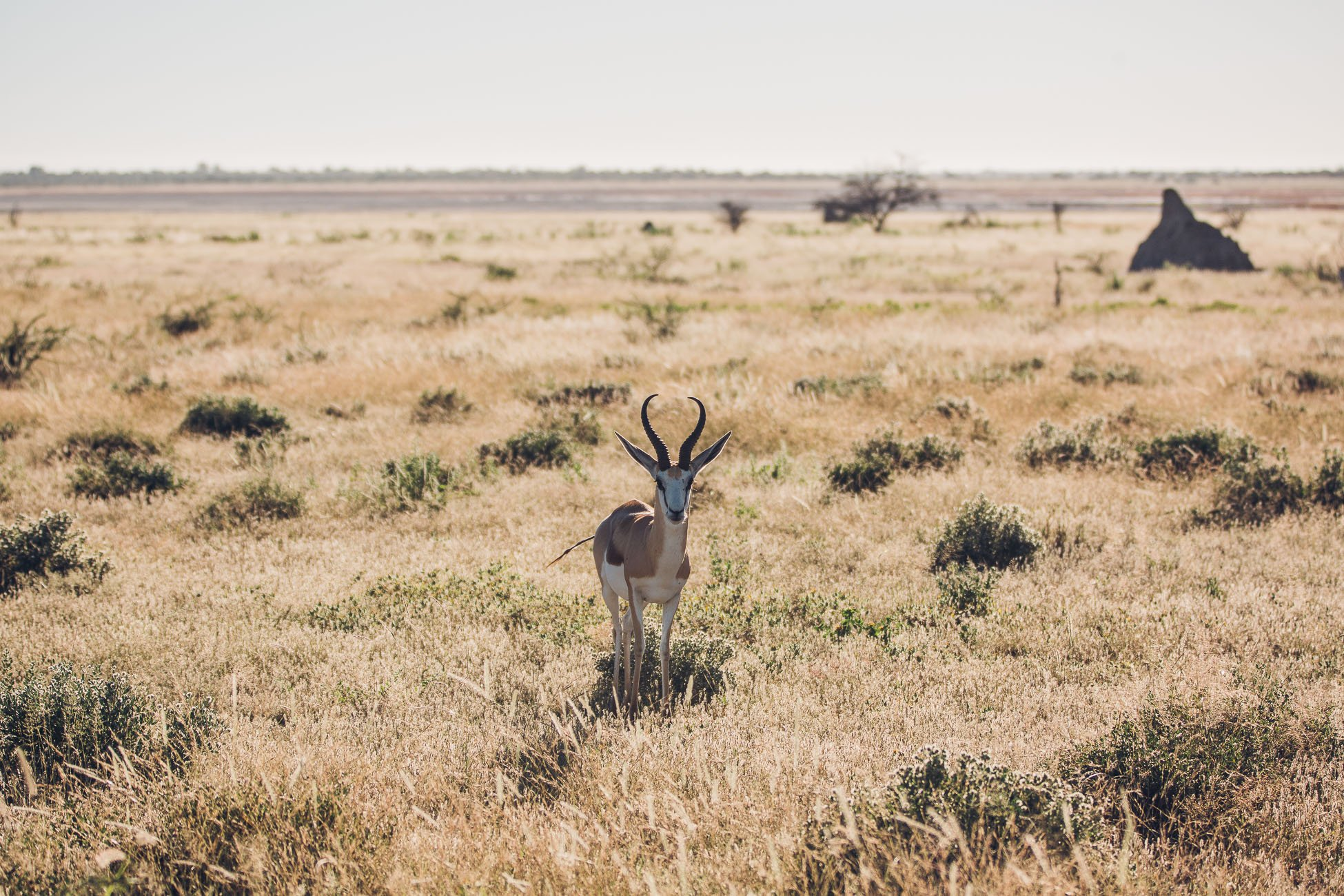Wildlife at Etosha National Park