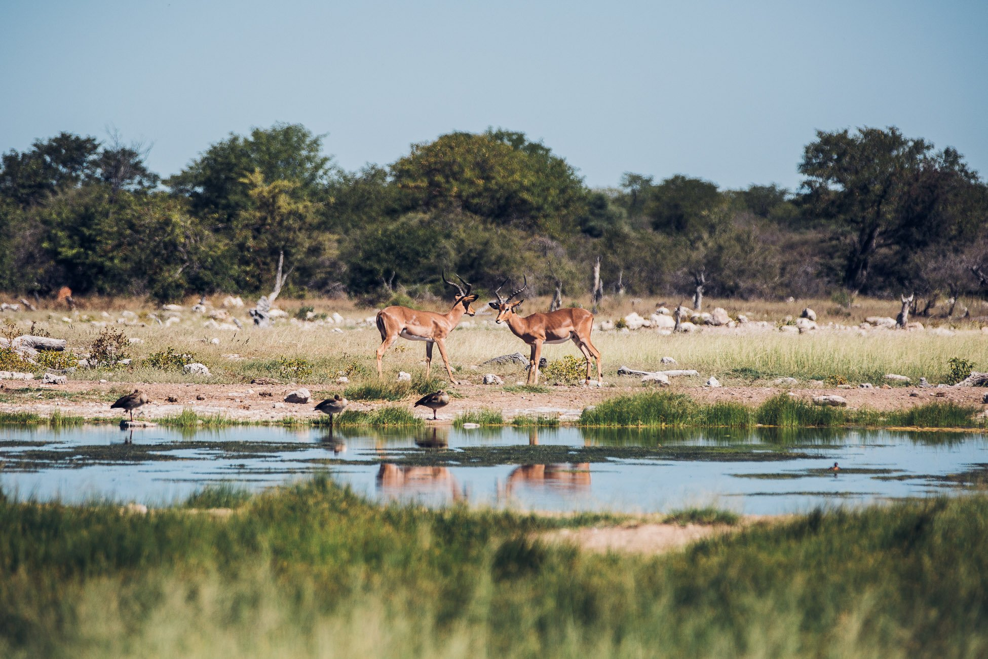 A waterhole at Etosha National Park