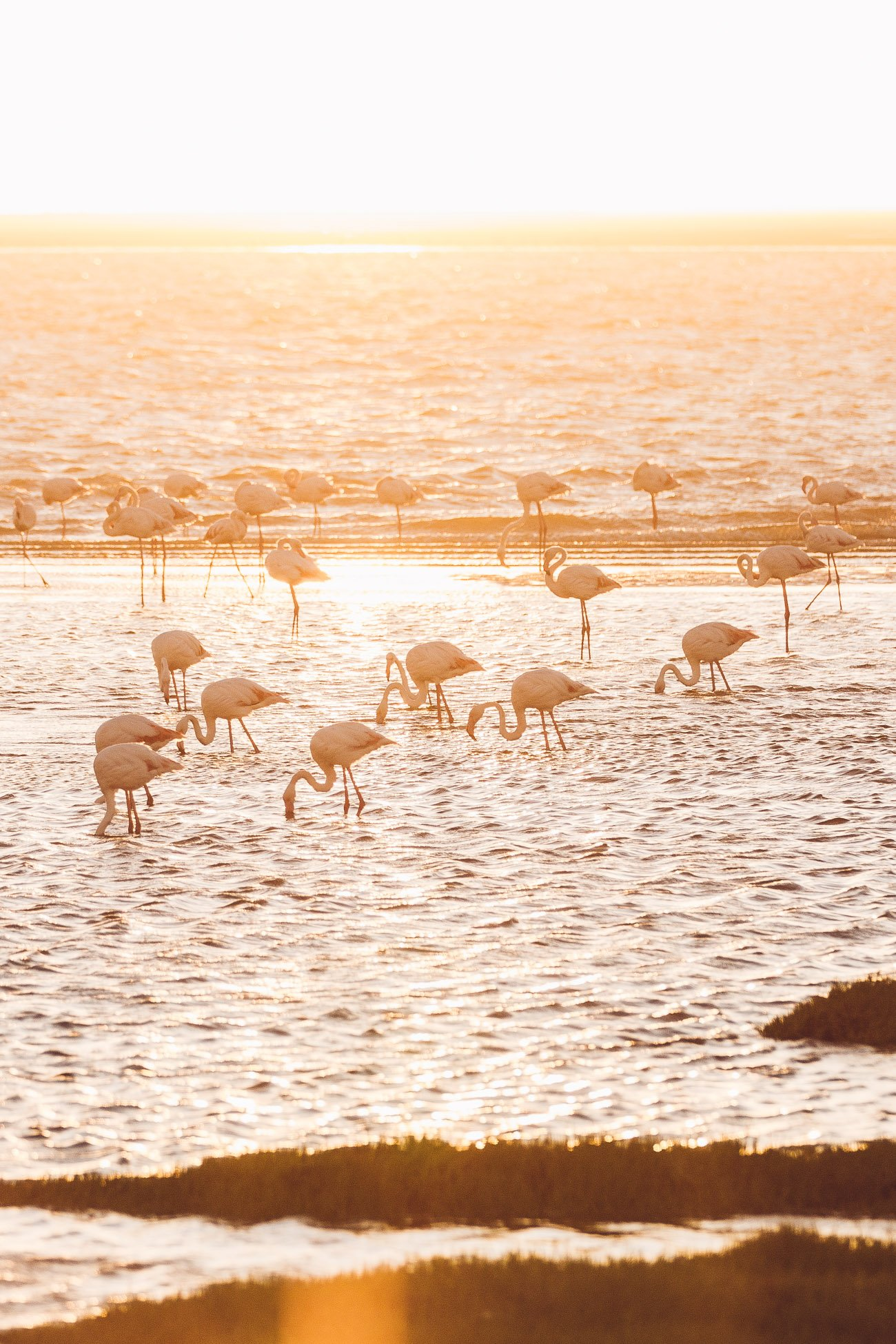 Flamingos at Walvis Bay Namibia