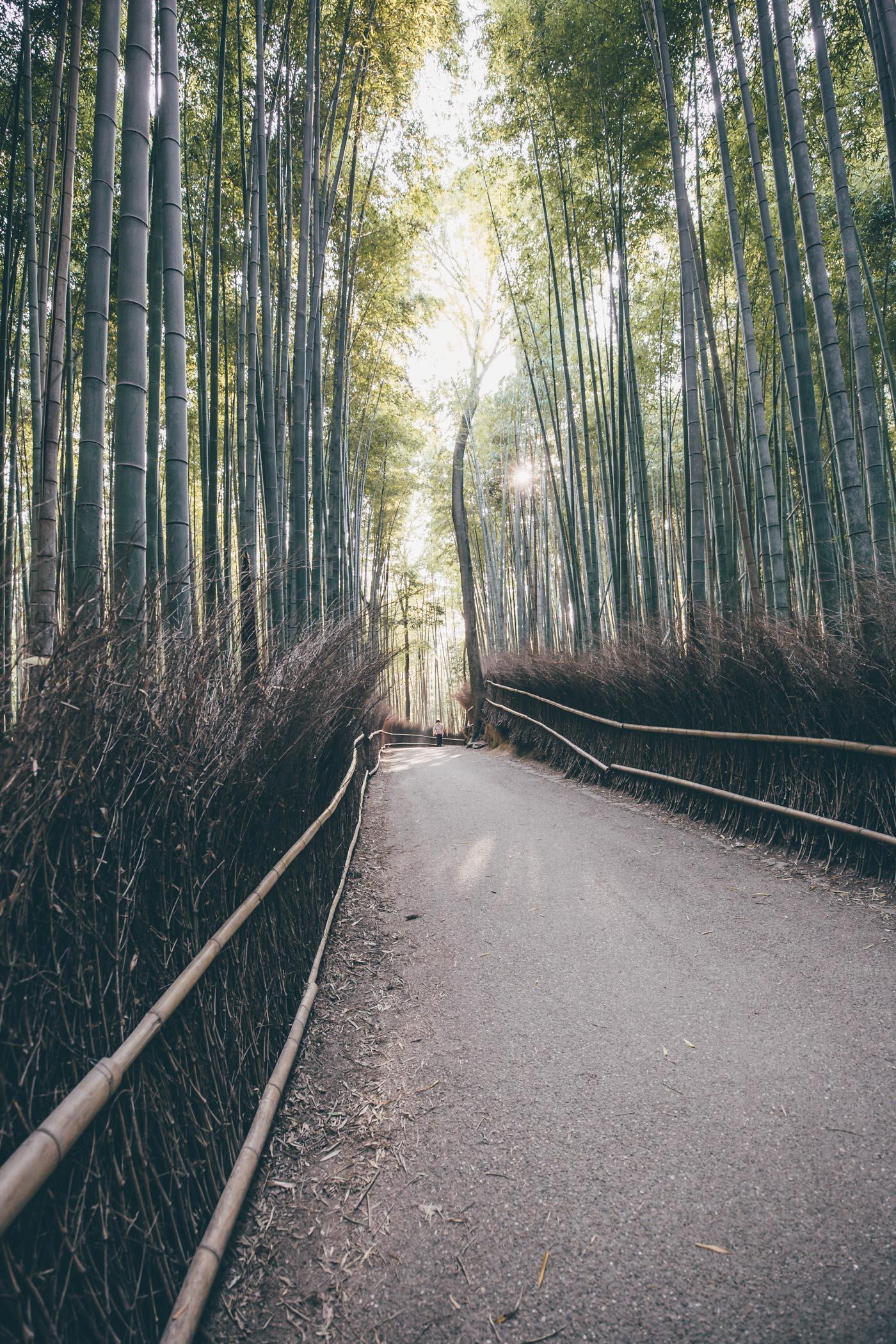 Arashiyama Bamboo Grove in Kyoto