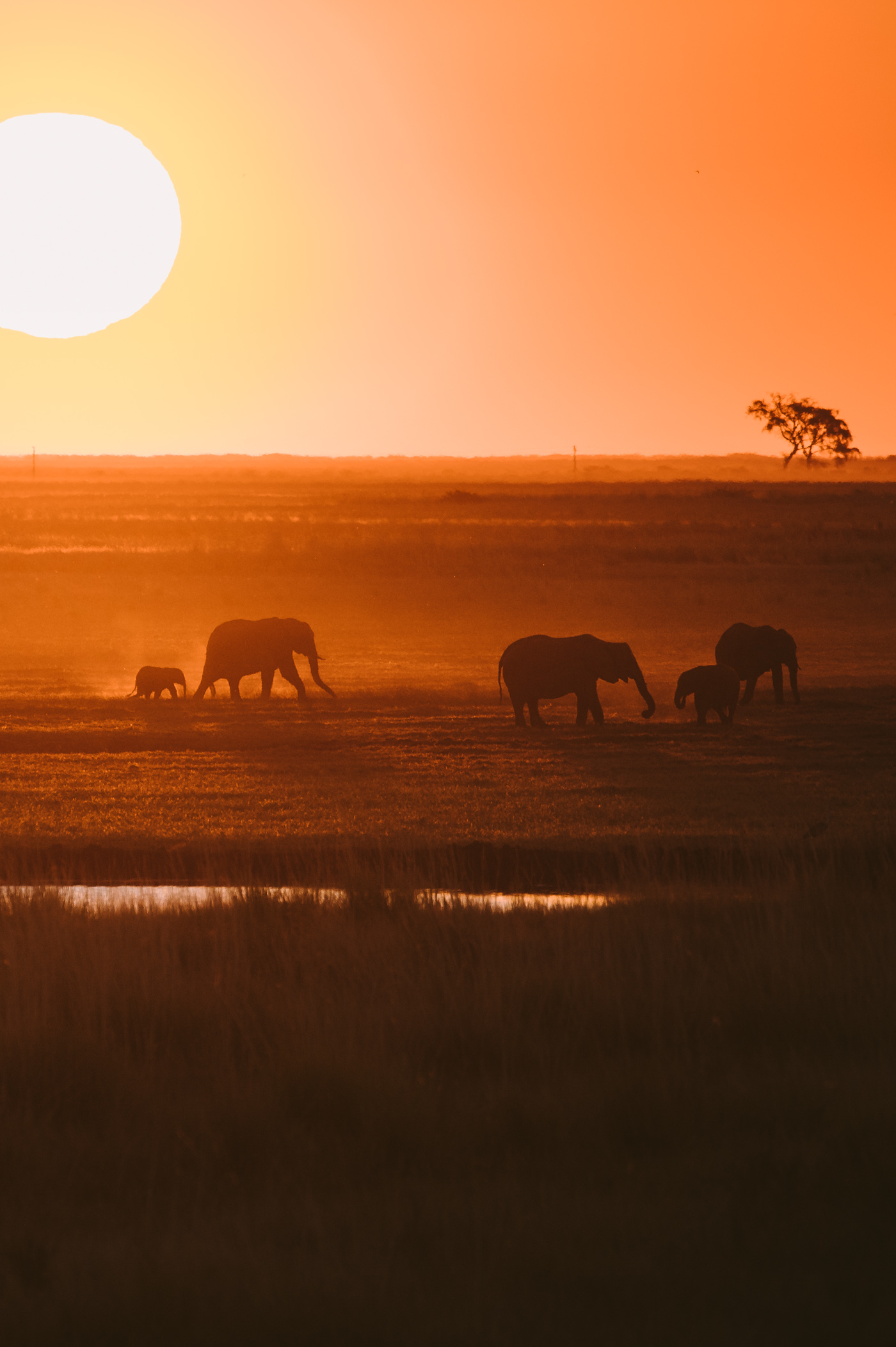 Chobe National Park Elephant herd at sunset