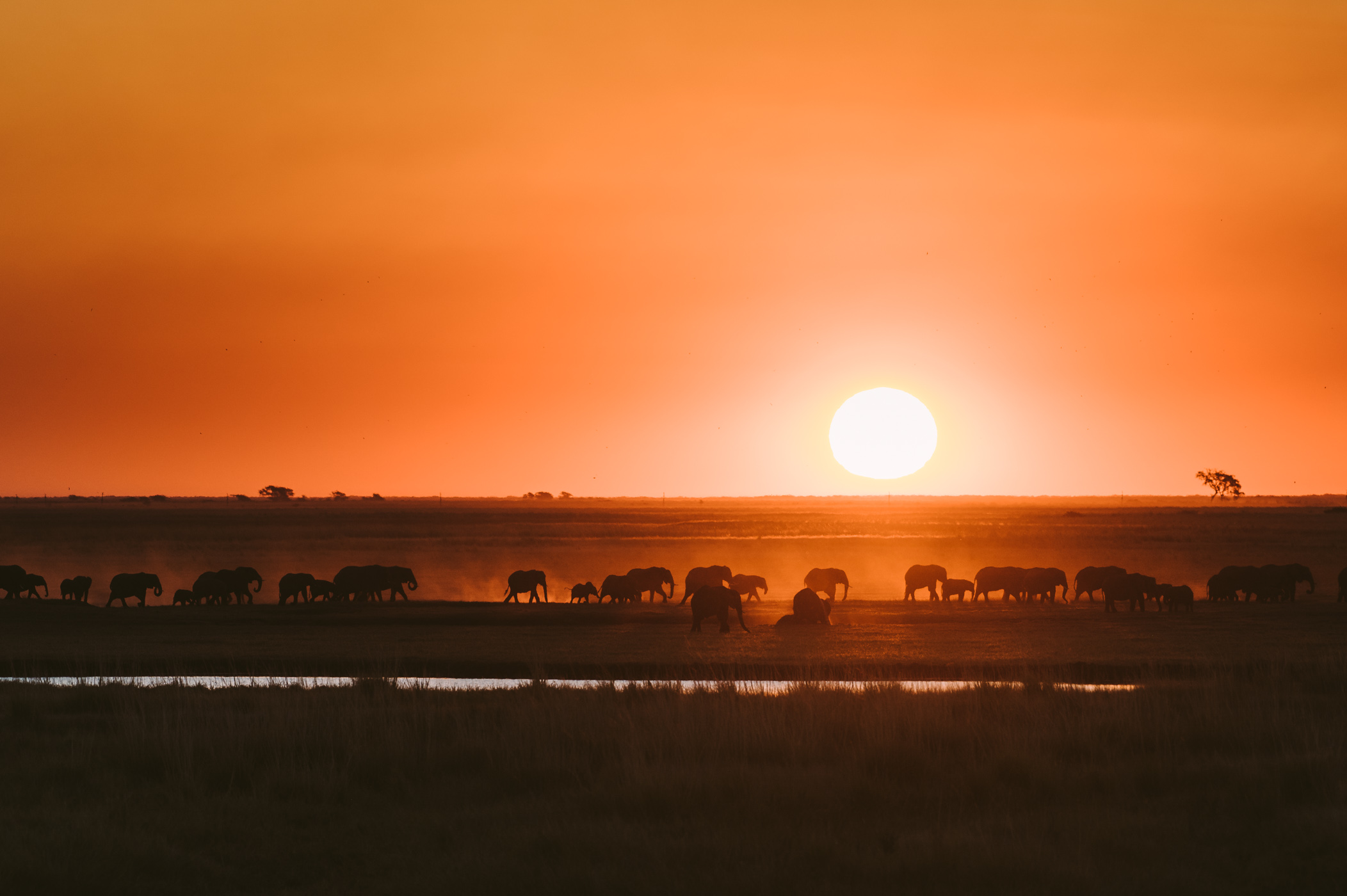 Elephants in Botswana's Chobe National Park