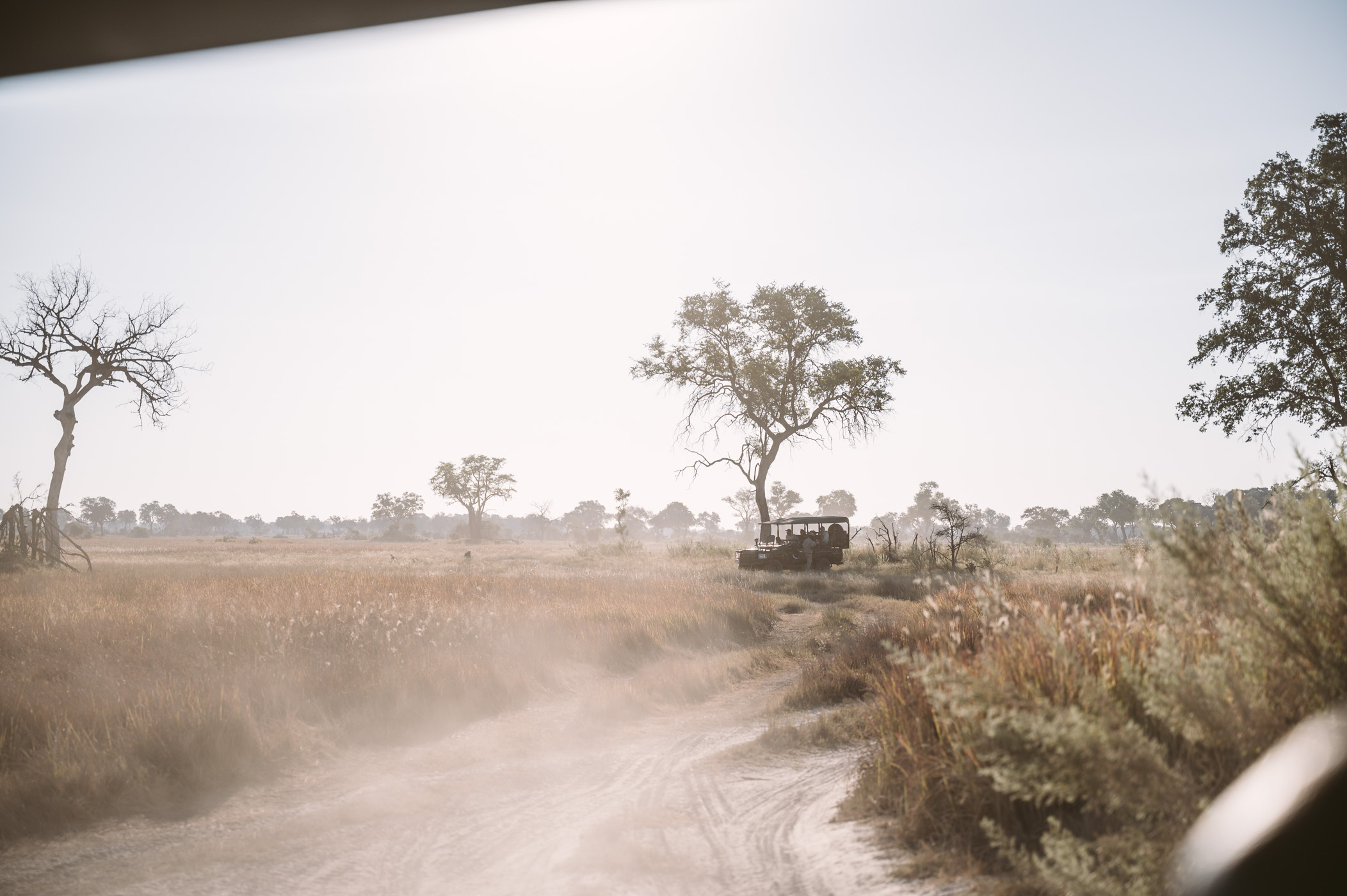Exploring the private concession of Xaranna in the Okavango Delta