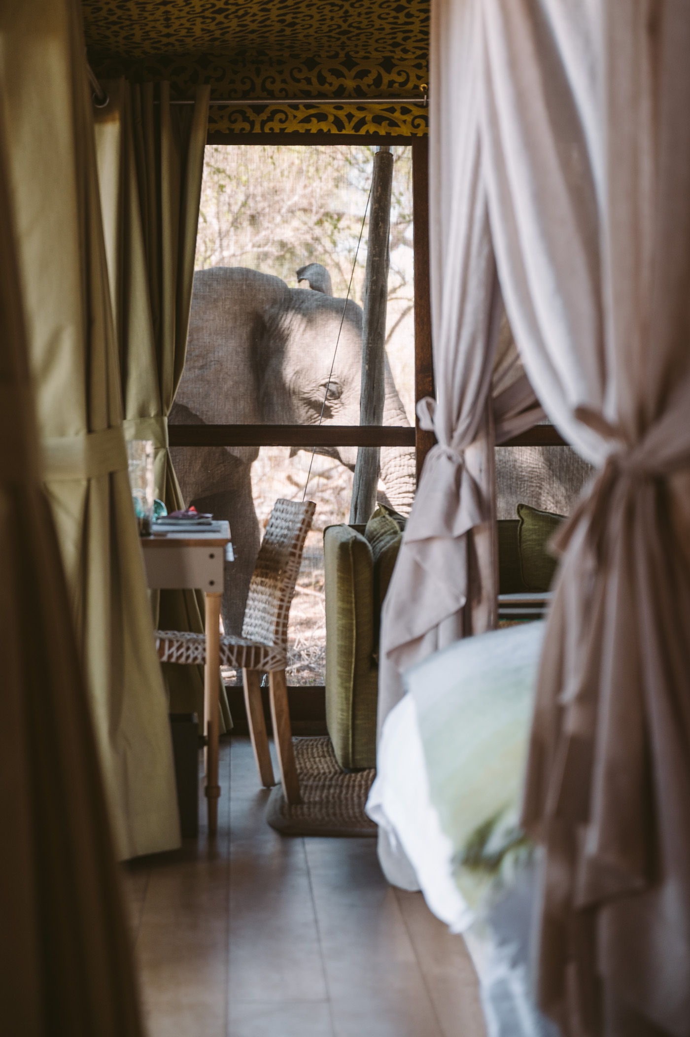 andBeyond Xaranna Okavango Delta Camp bedroom with elephant passing by