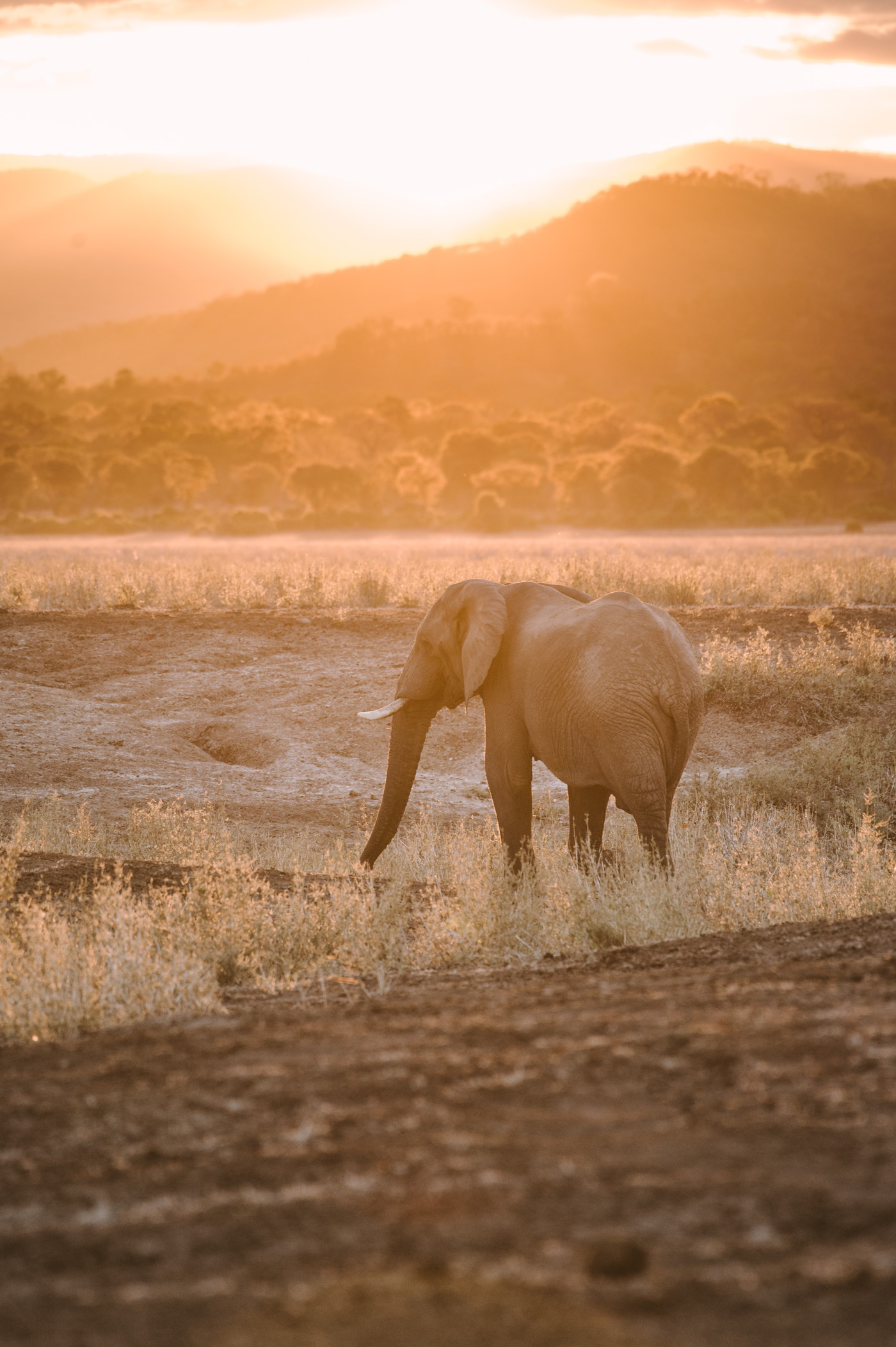 Elephant in Lower Zambezi National Park Zambia