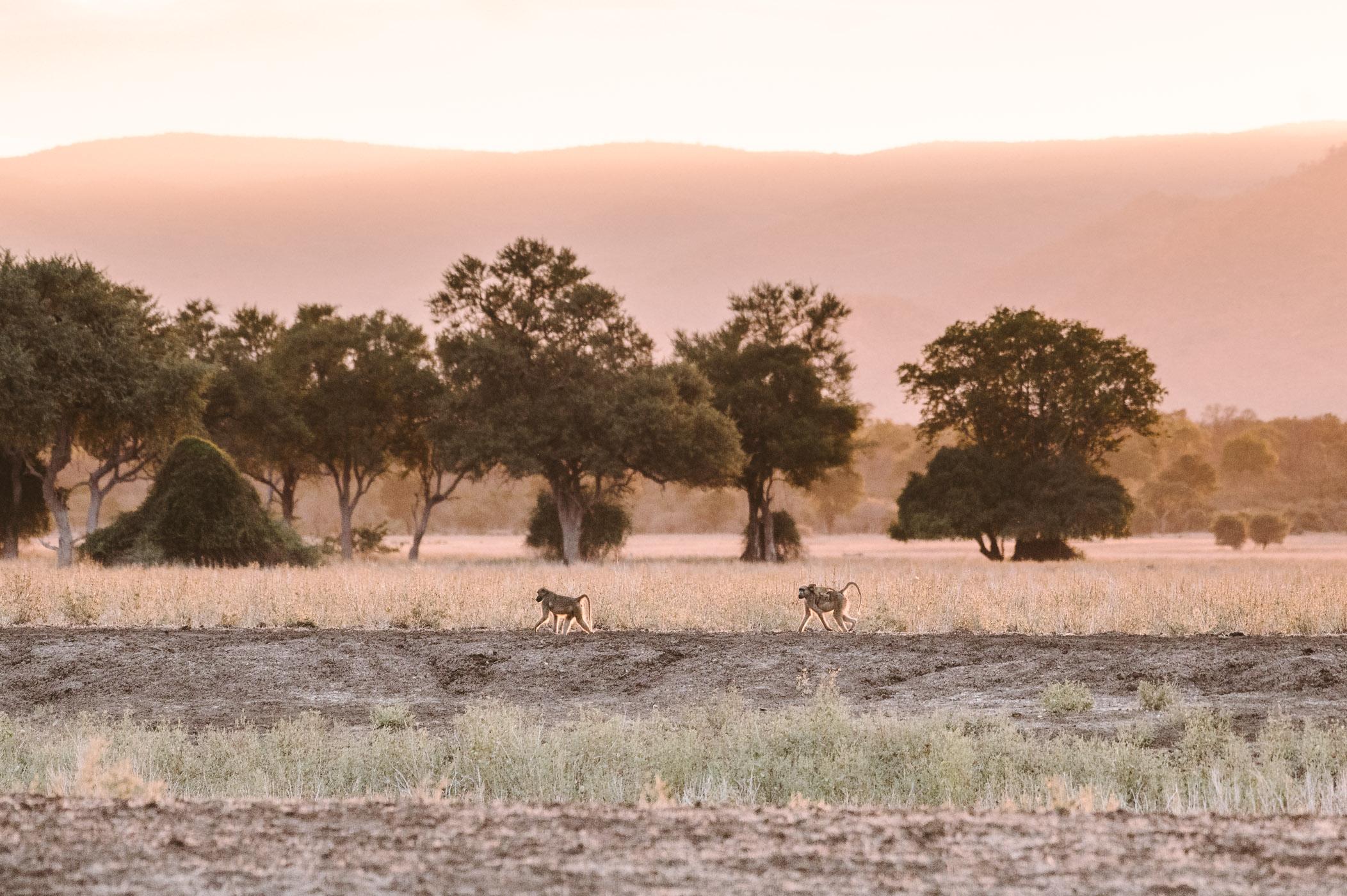 Sunset at Jeki Plains Lower Zambezi National Park Zambia
