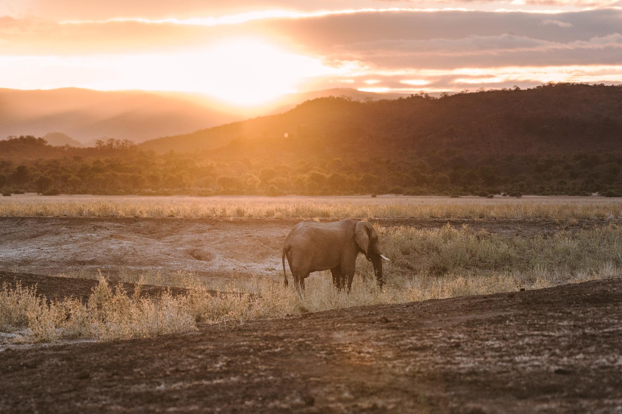 Lower Zambezi sunset at Jeki Plain with elephant