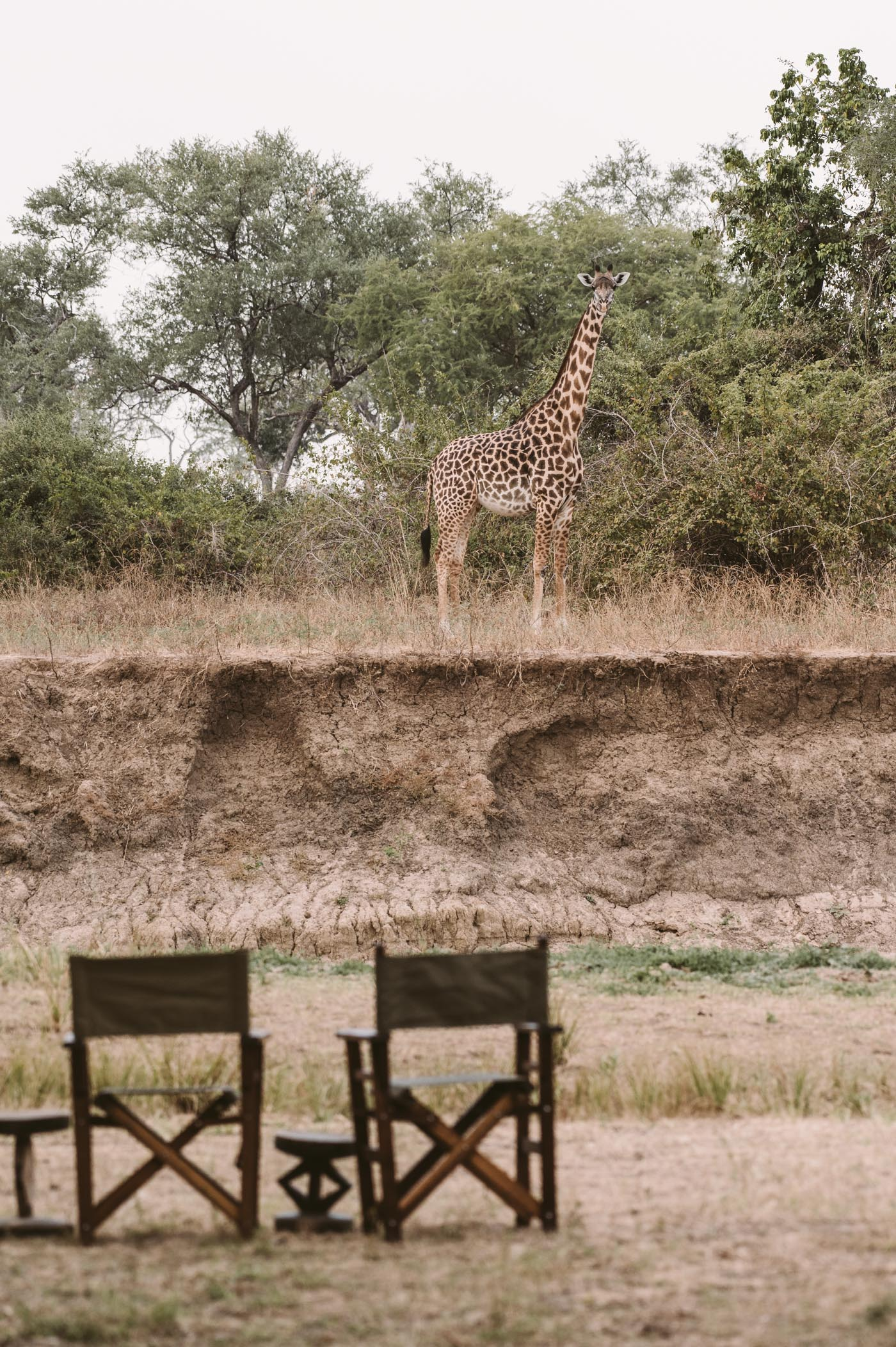 Mwamba camp by Shenton Safaris in South Luangwa National Park Zambia