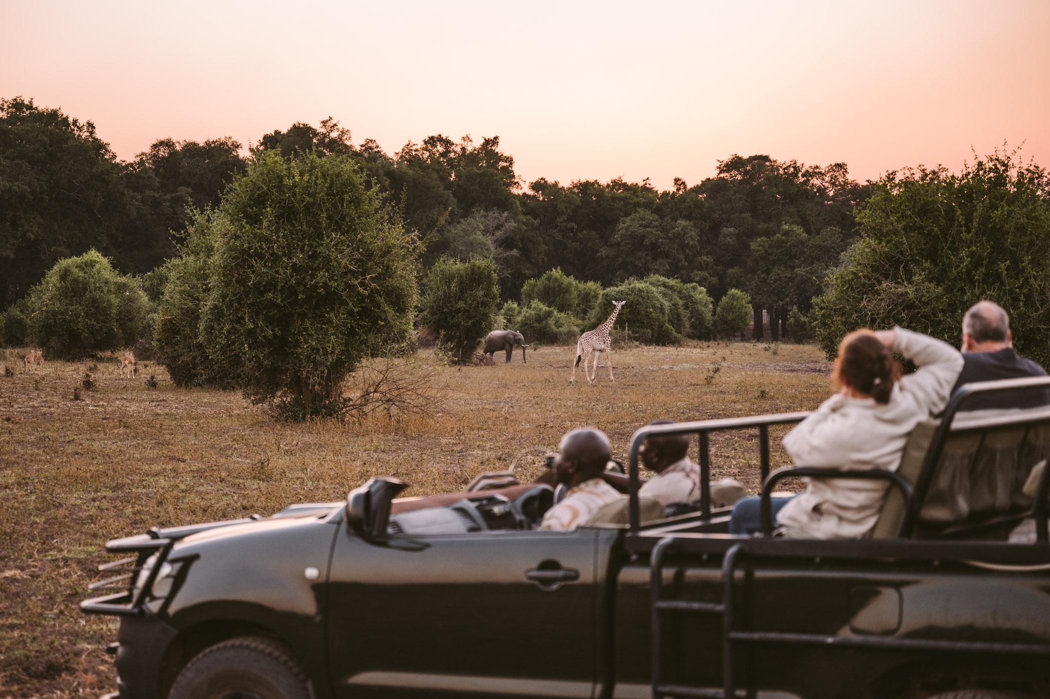 Safari in South Luangwa National Park Zambia