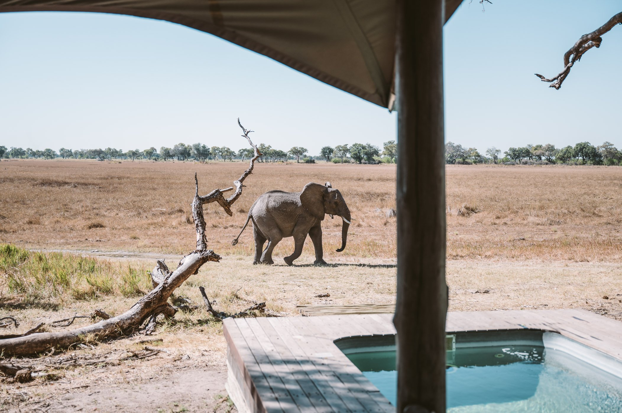 andBeyond Xaranna Okavango Delta Camp elephant by the pool