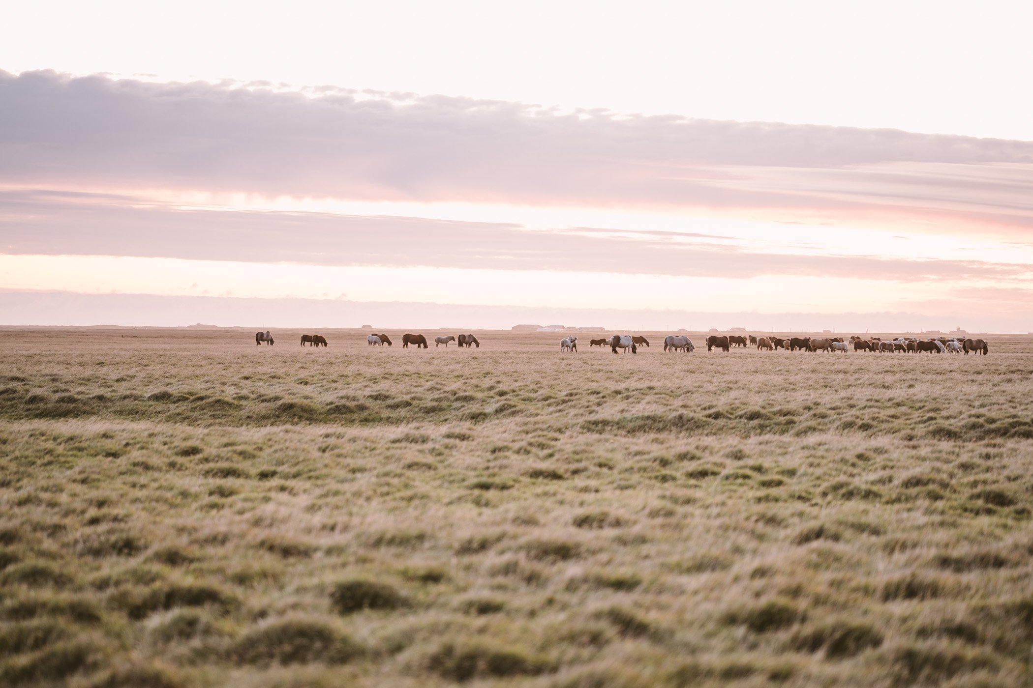 Horses in the sunset near Landeyjahöfn