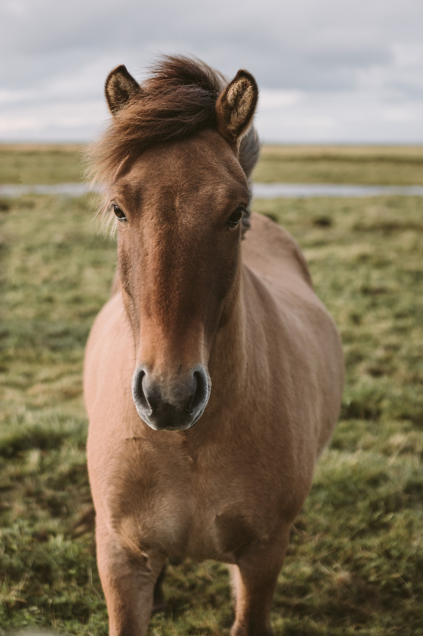 Horses at Hotel Eldhestar in Iceland