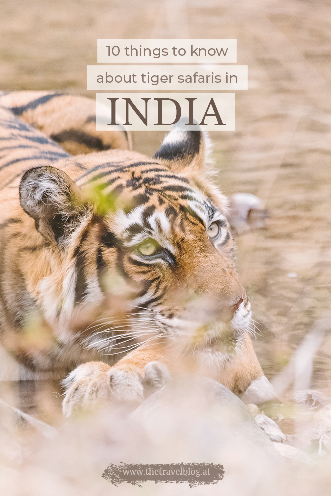 10 things to know for a tiger safari in India
