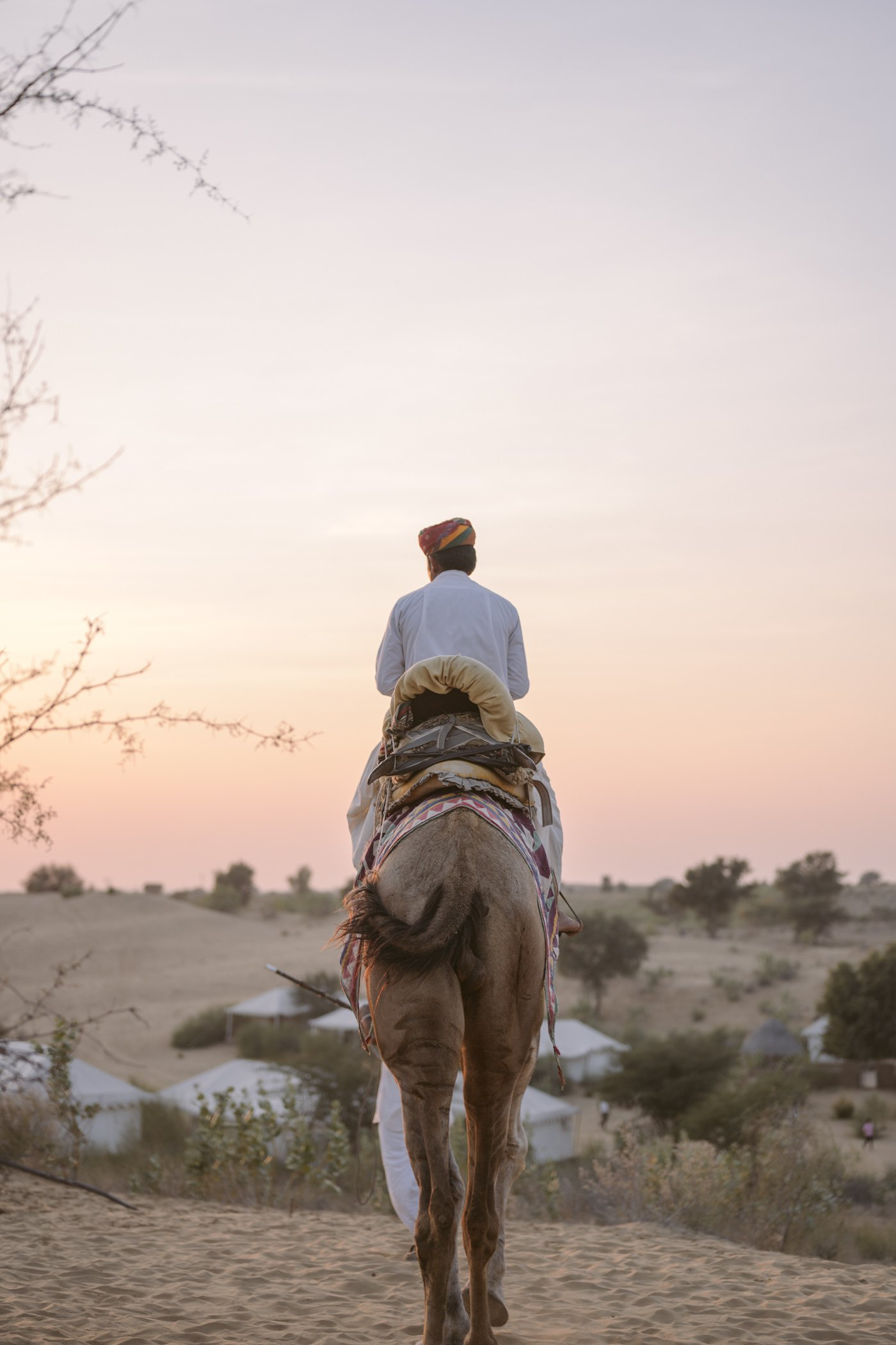 Camel in the Thar desert Rajasthan