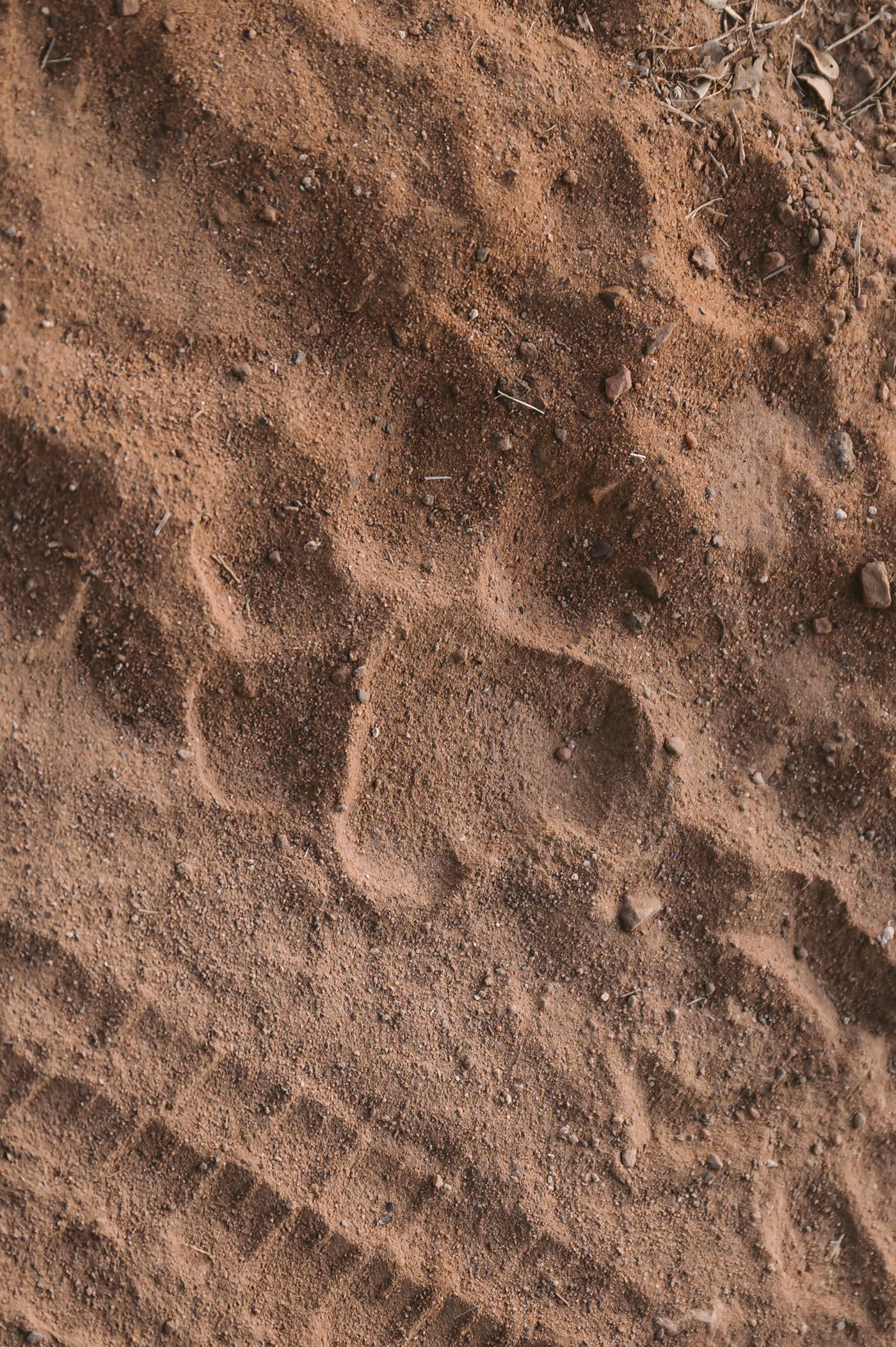 Tiger footprint at Ranthambore National Park