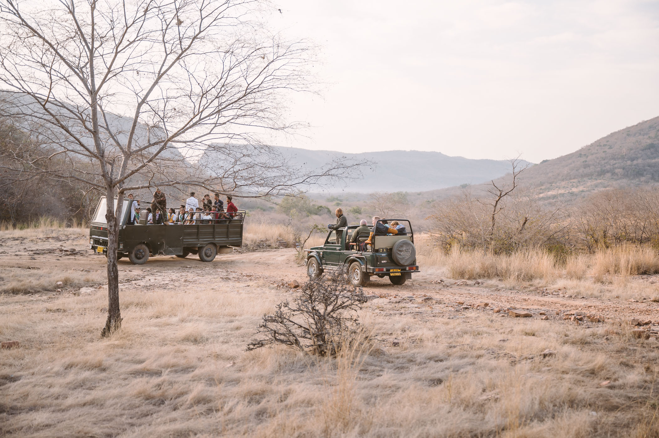 Canters vs. Gypsies in Ranthambore National Park