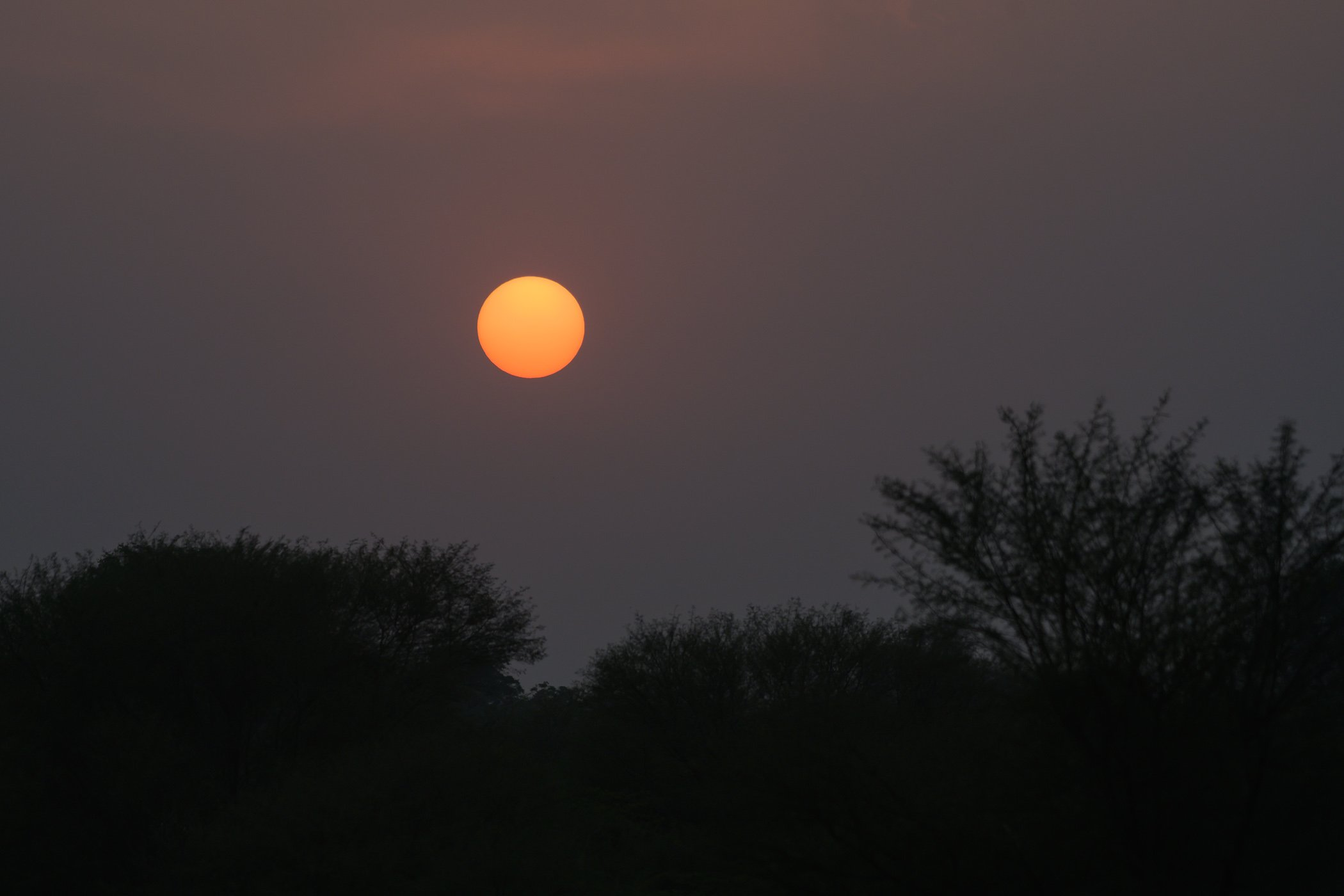 Sunset in Ranthambore National Park India Rajasthan