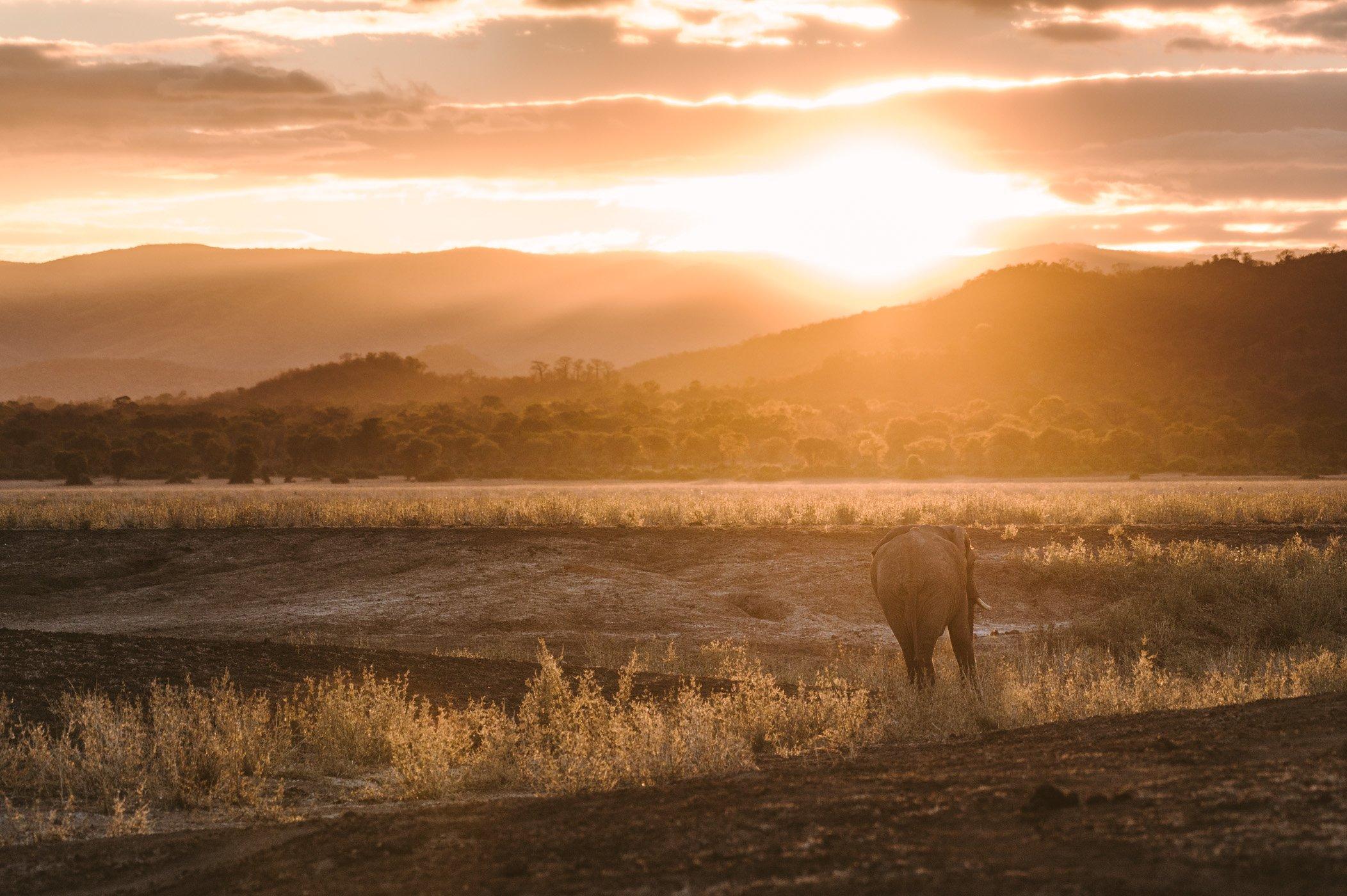 Elephant walks into the sunset in the Lower Zambezi National Park in Zambia