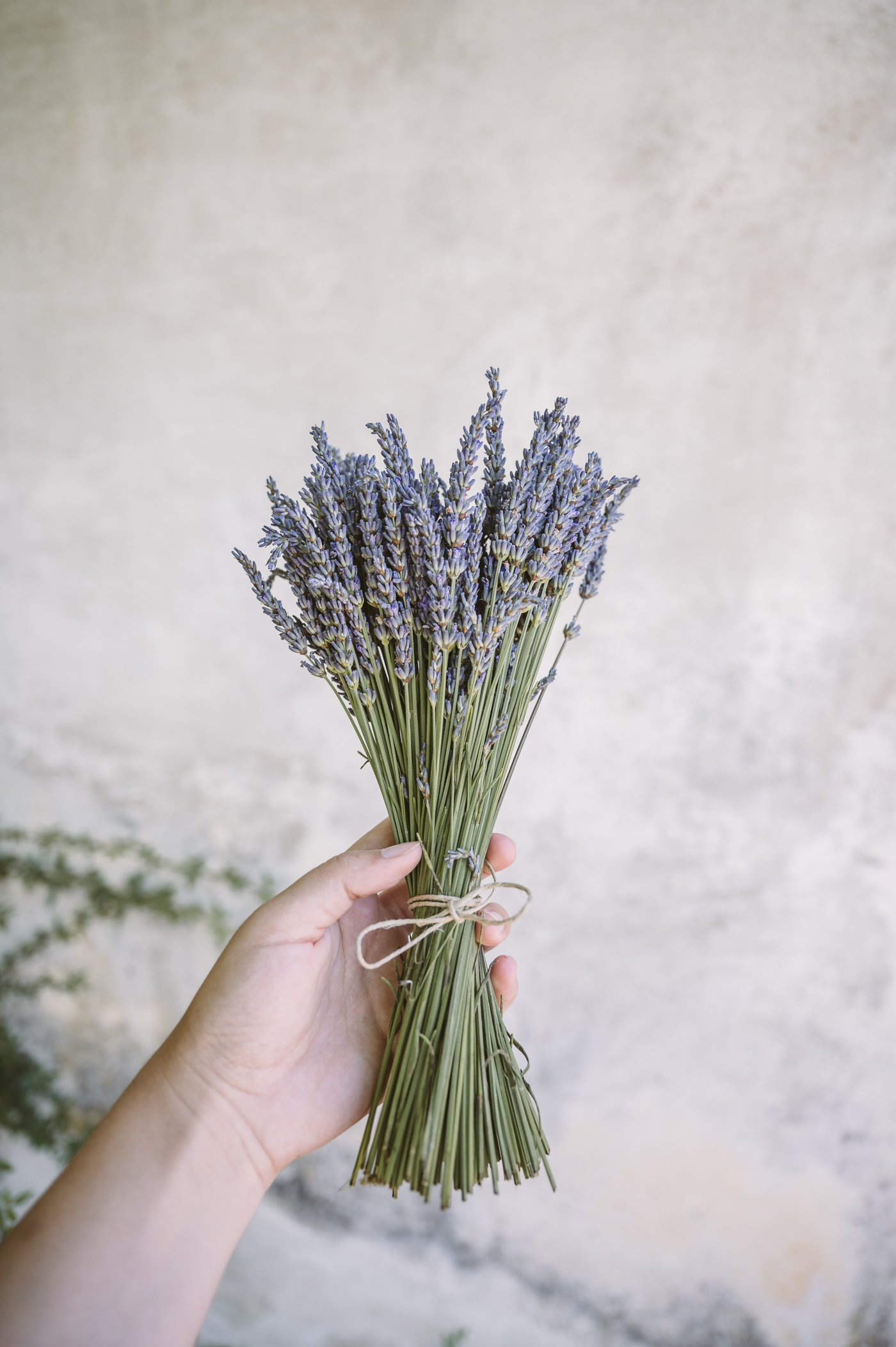 Lavender festival at Wunsum lavender farm in Kitzeck in Southern Styria